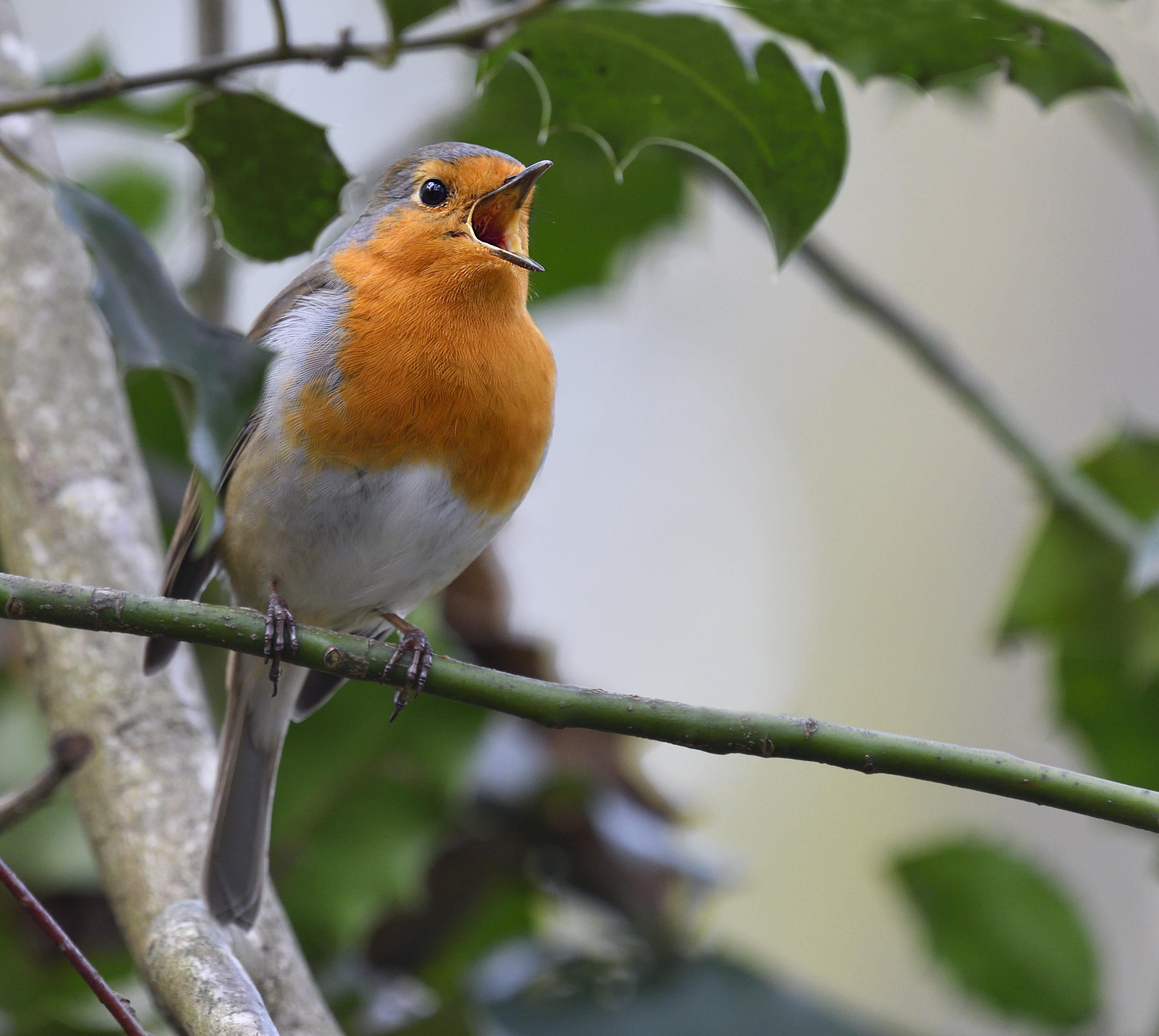 30 év alatt 120 ezer madárpár tűnt el a Boden-tó vidékéről