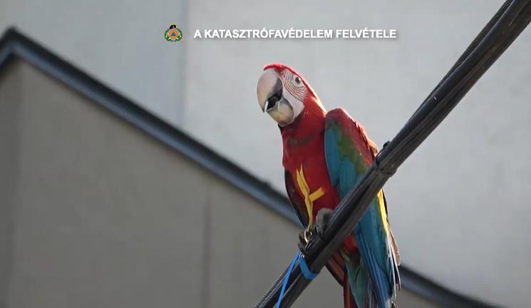Slamasztikába került papagájt mentettek a budapesti tűzoltók