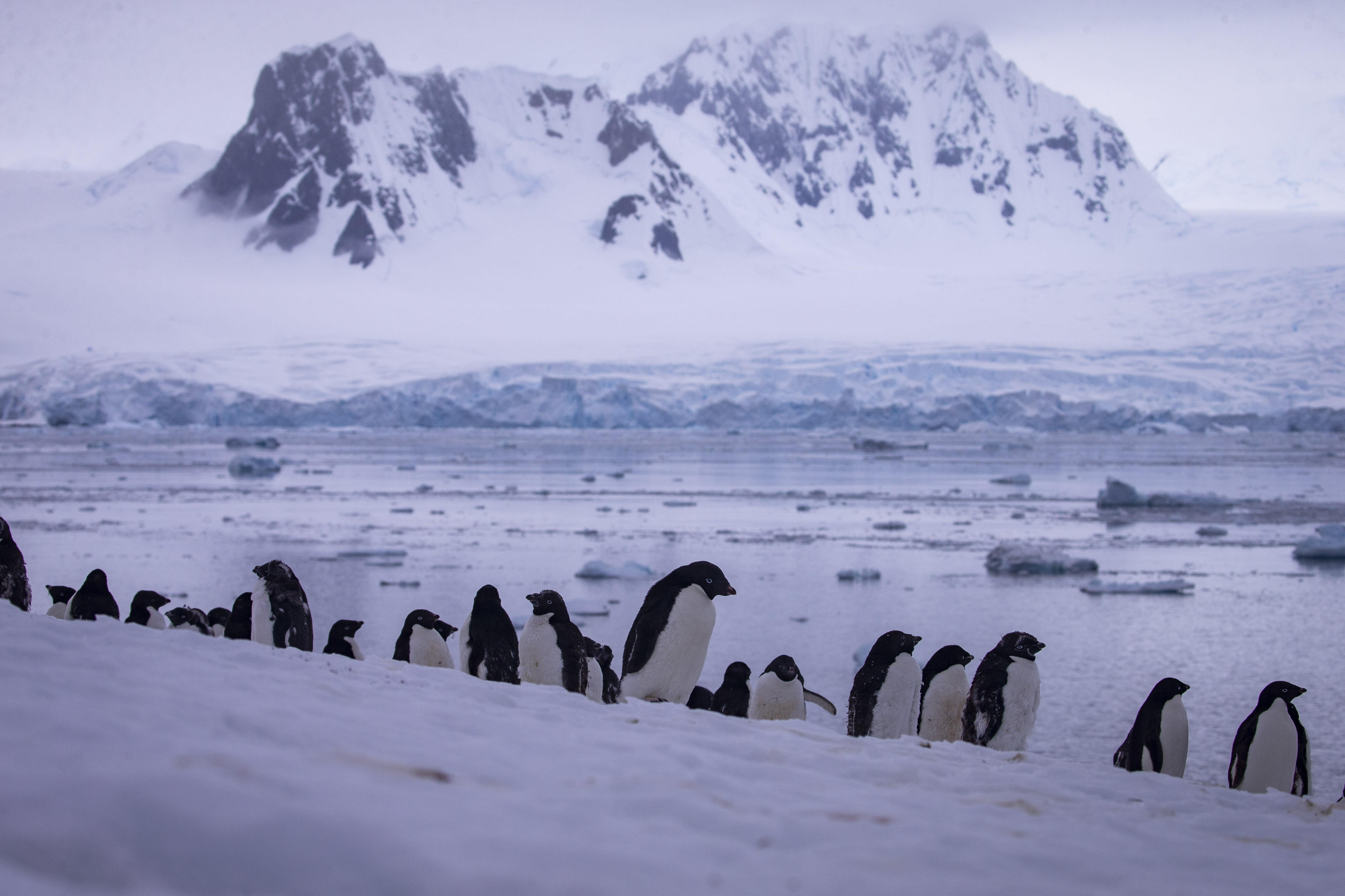 Augusztus óta több mint harmincezer földrengés volt az Antarktiszon