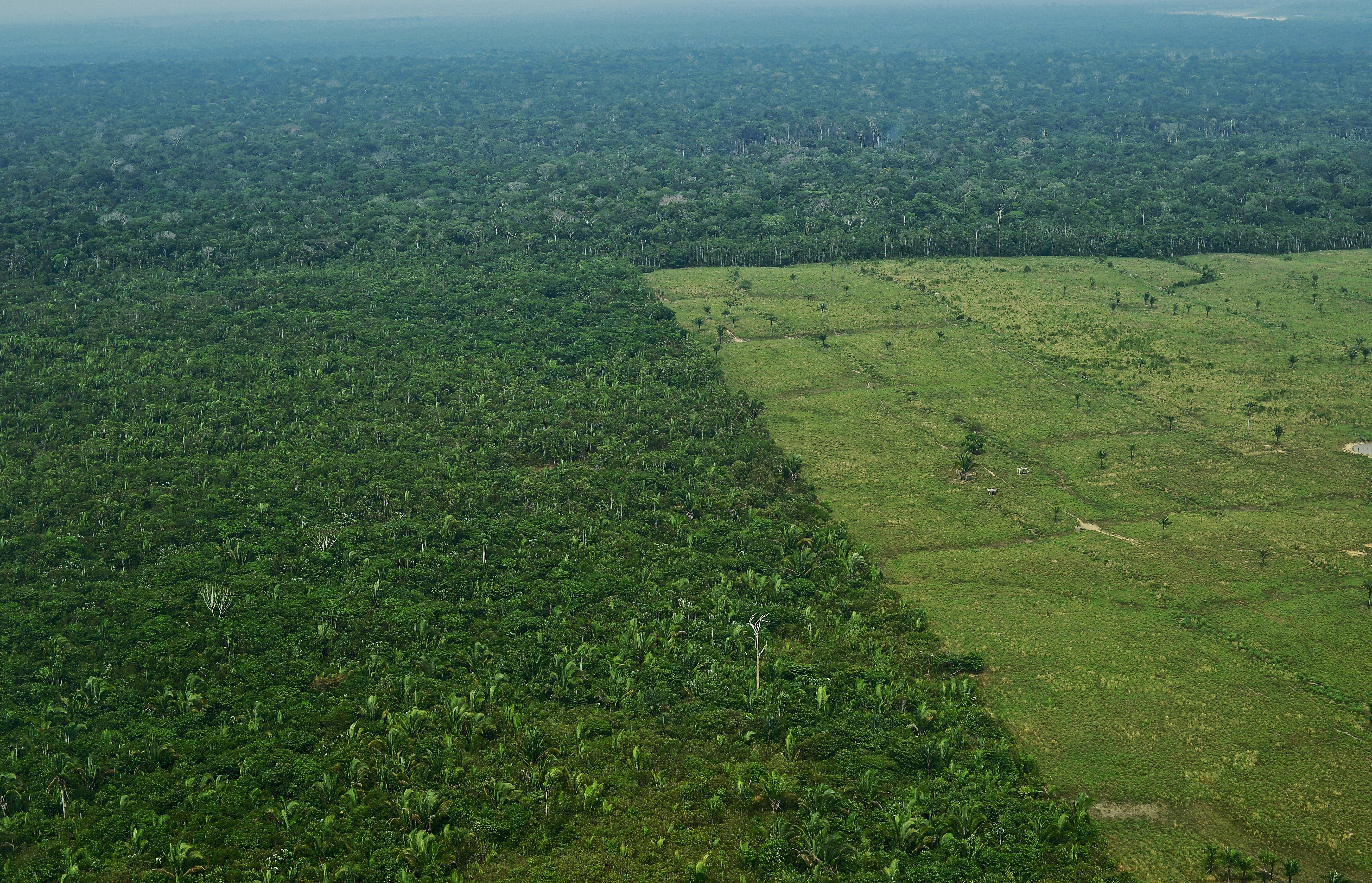 Lehet, hogy még több fával lassíthatnánk a klímaváltozást, de az Amazonasnál pont most kapcsoltak csúcssebességre az erdőirtók