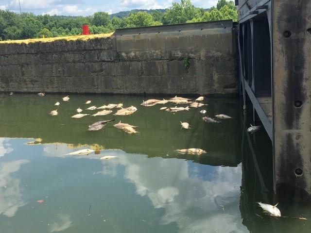 Ezrével kezdtek pusztulni a halak, miután alkohol jutott a Kentucky folyóban a Jim Beam leégett raktárából