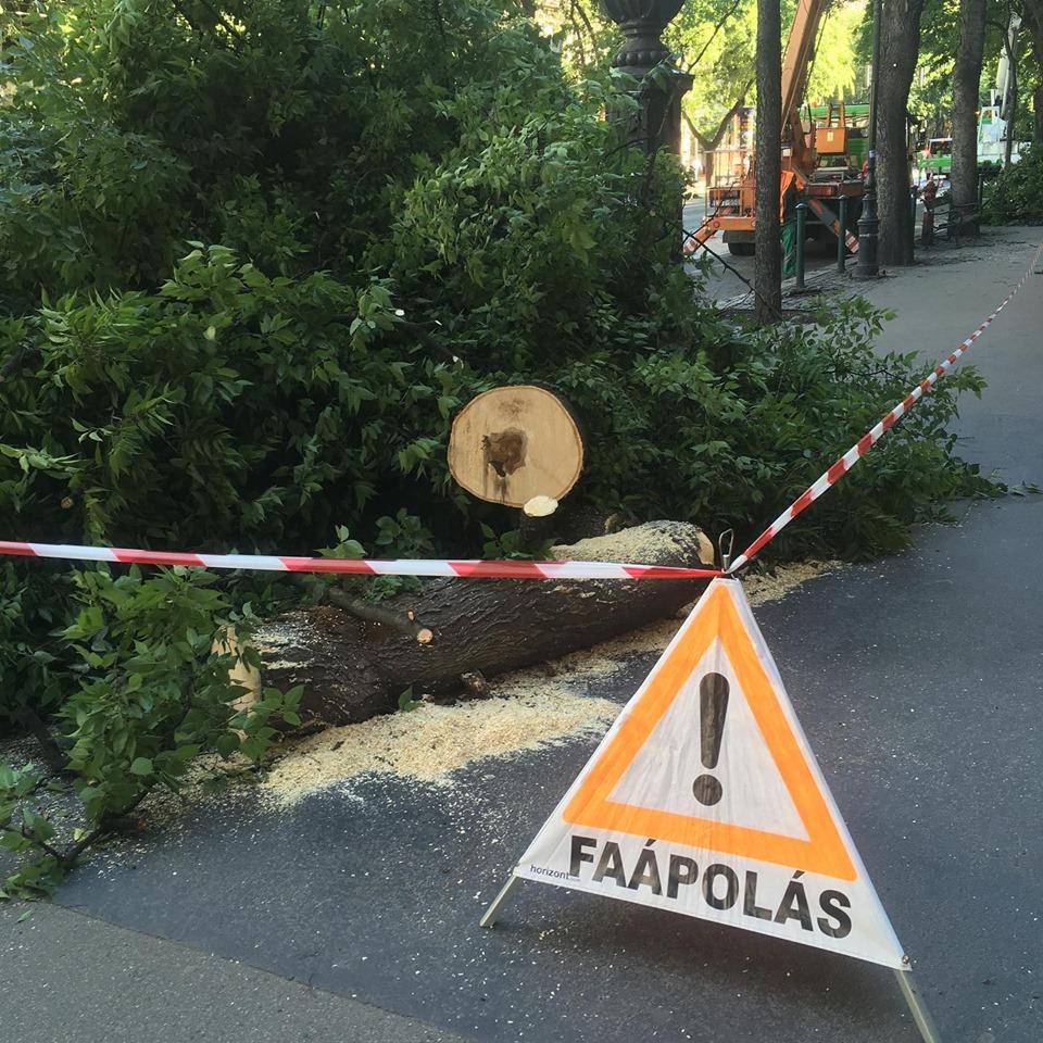 Nyolc fát vágnak ki az Andrássy úton