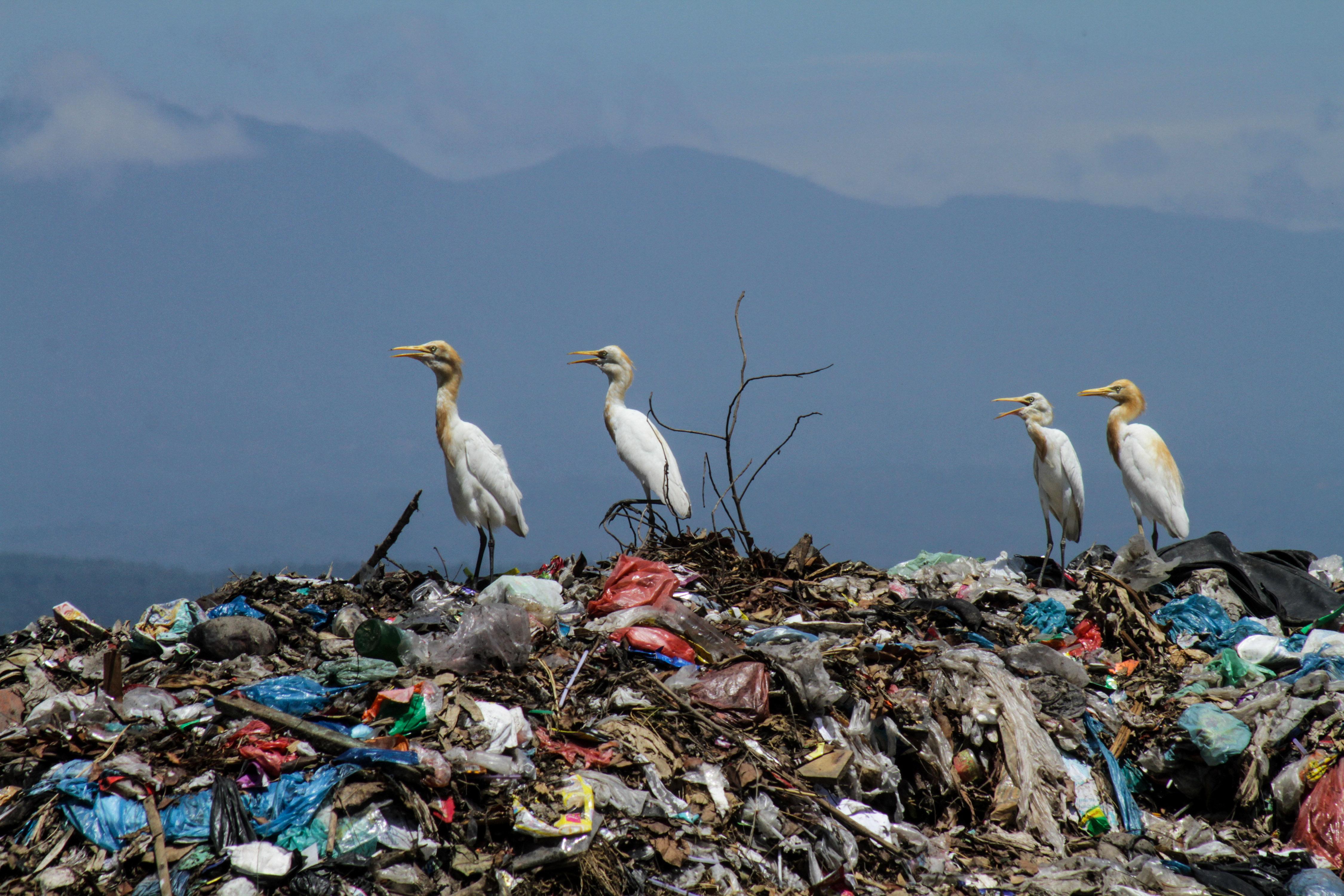 A San Franciscó-i reptéren betiltják a műanyagpalackos vizet