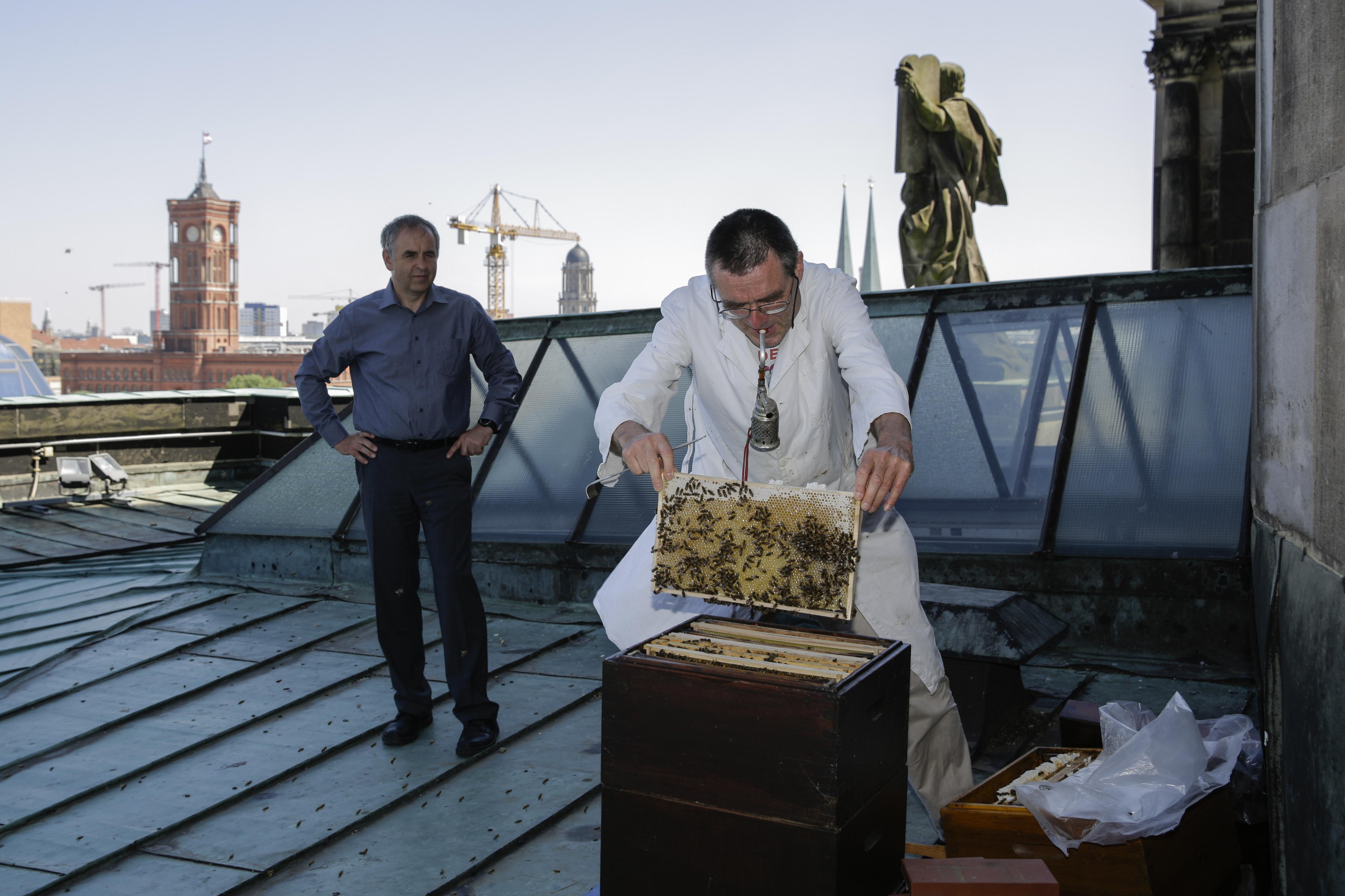 A tapasztalatlan hobbitartóktól elszabadult, kóbor méhrajok garázdálkodnak Berlinben