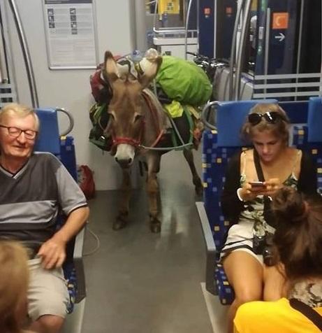 Elégedetten szállt le egy szamár és egy kecske a MÁV járatáról