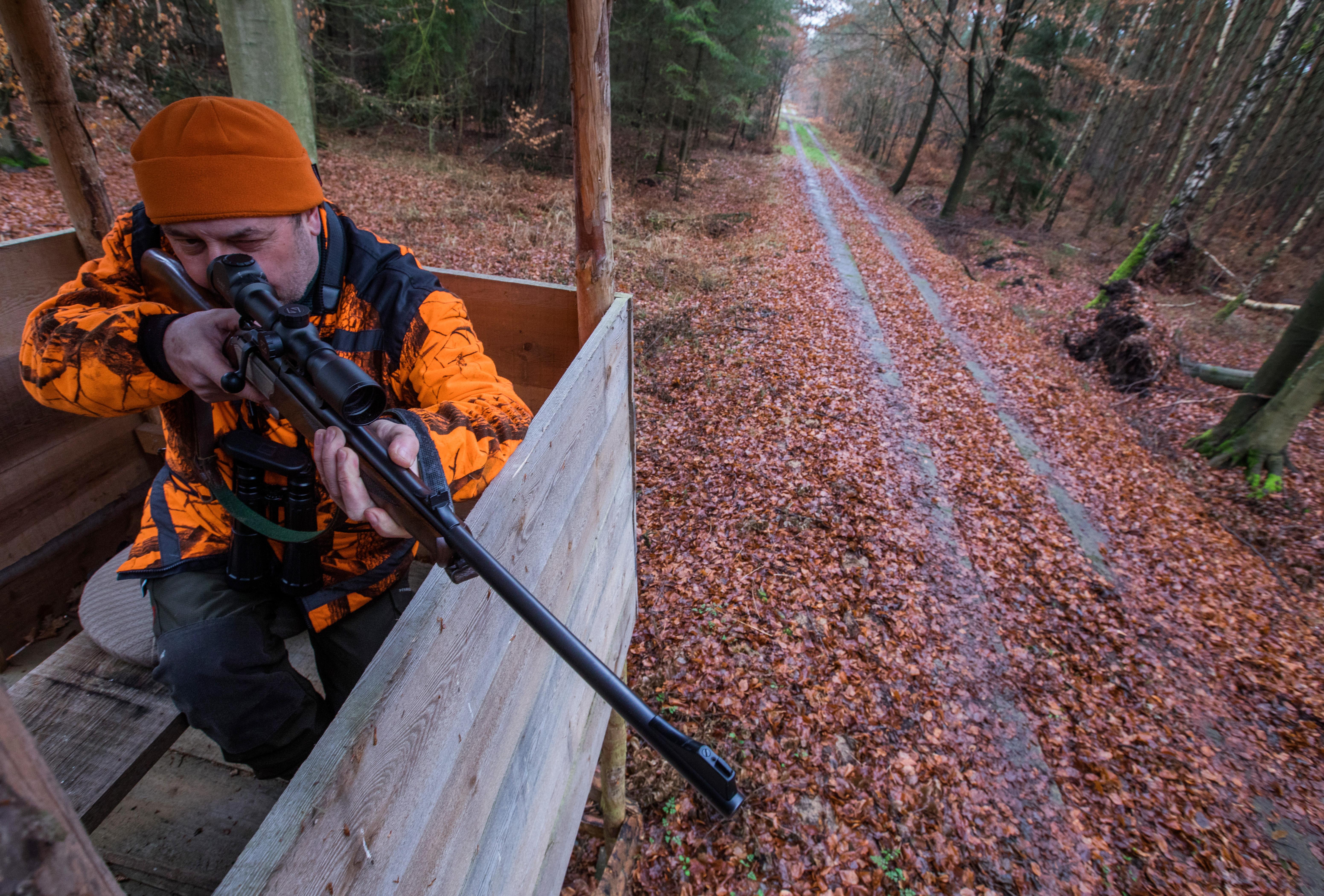 Több dél-dunántúli erdőben is korlátozzák a belépést, hogy megóvják a vadak nyugalmát a vadászidény alatt