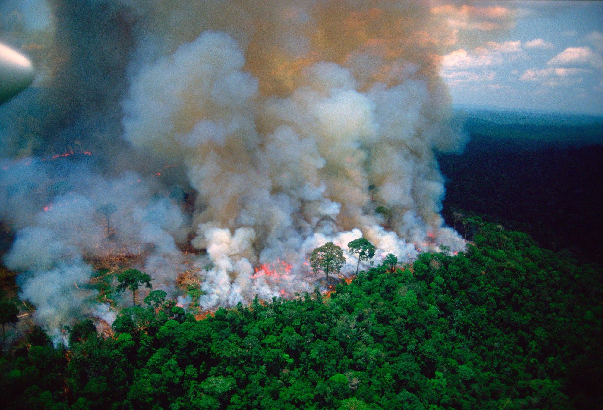 Egyre kevesebb szén-dioxidot kötnek meg a trópusi esőerdők