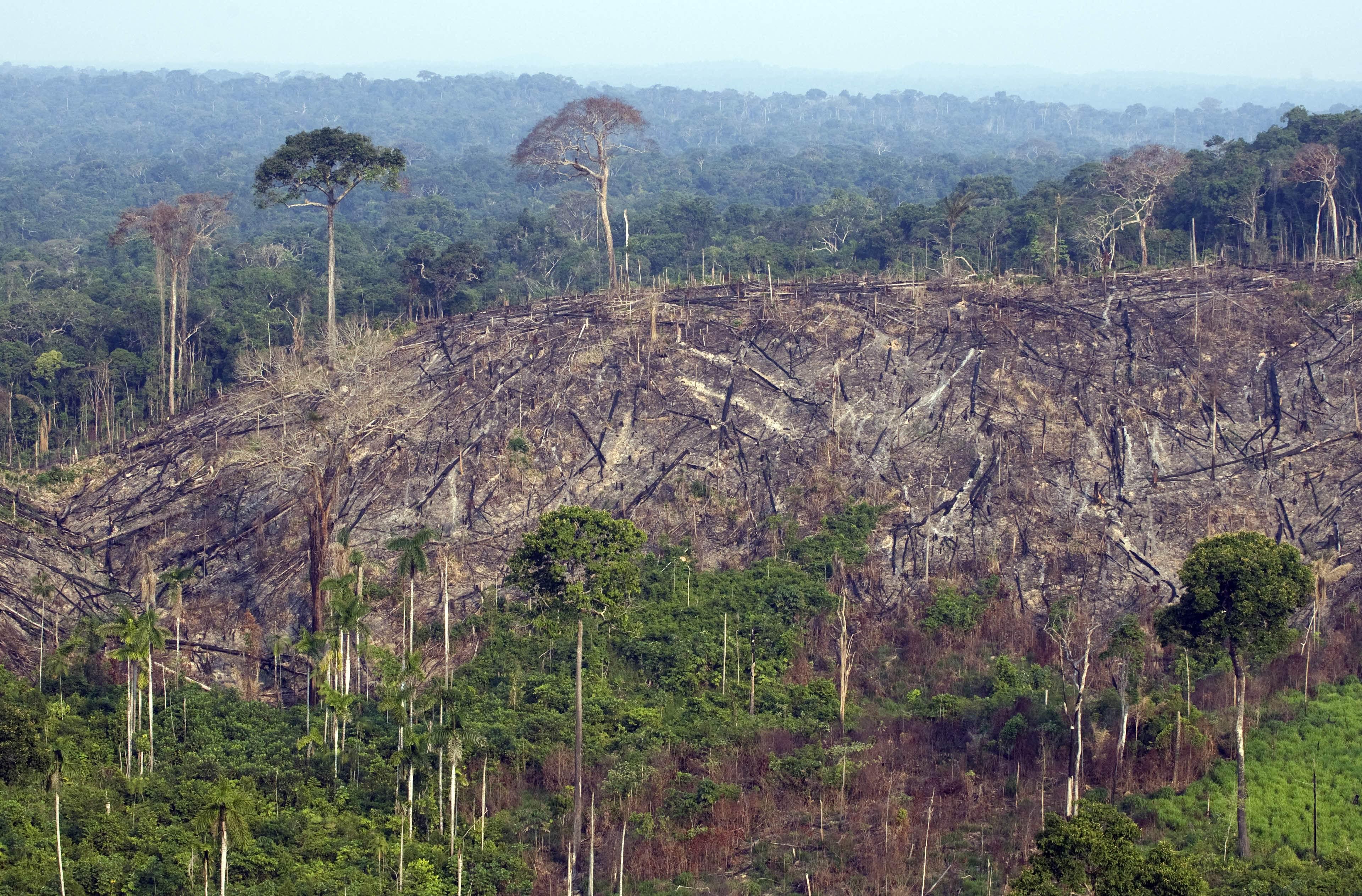 A brazil hadsereget is bevetik a hatalmas erdőtűz megfékezésére