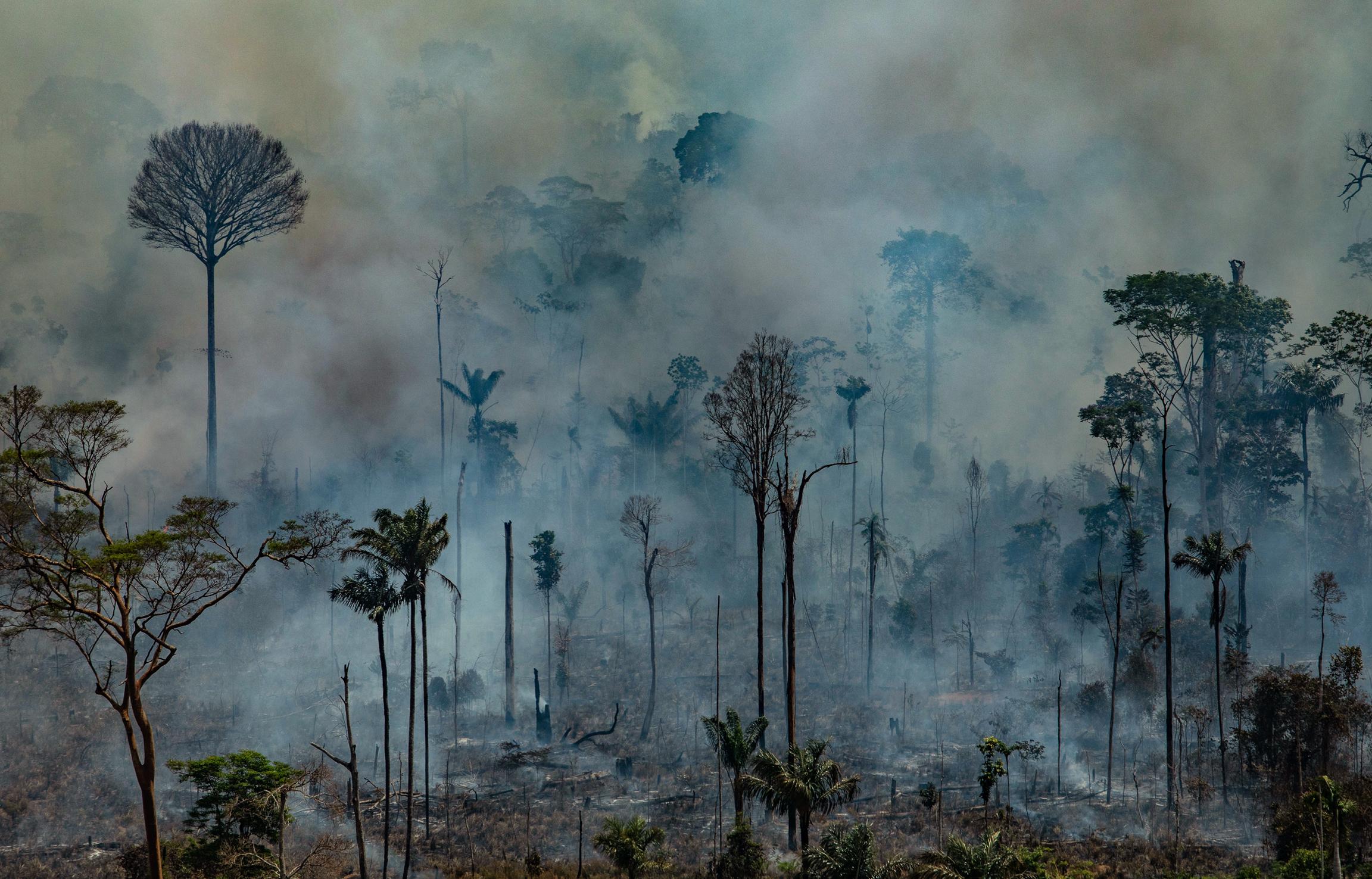 A Föld tüdejéből lassan a Föld tüdőrákjává válik az amazóniai esőerdő