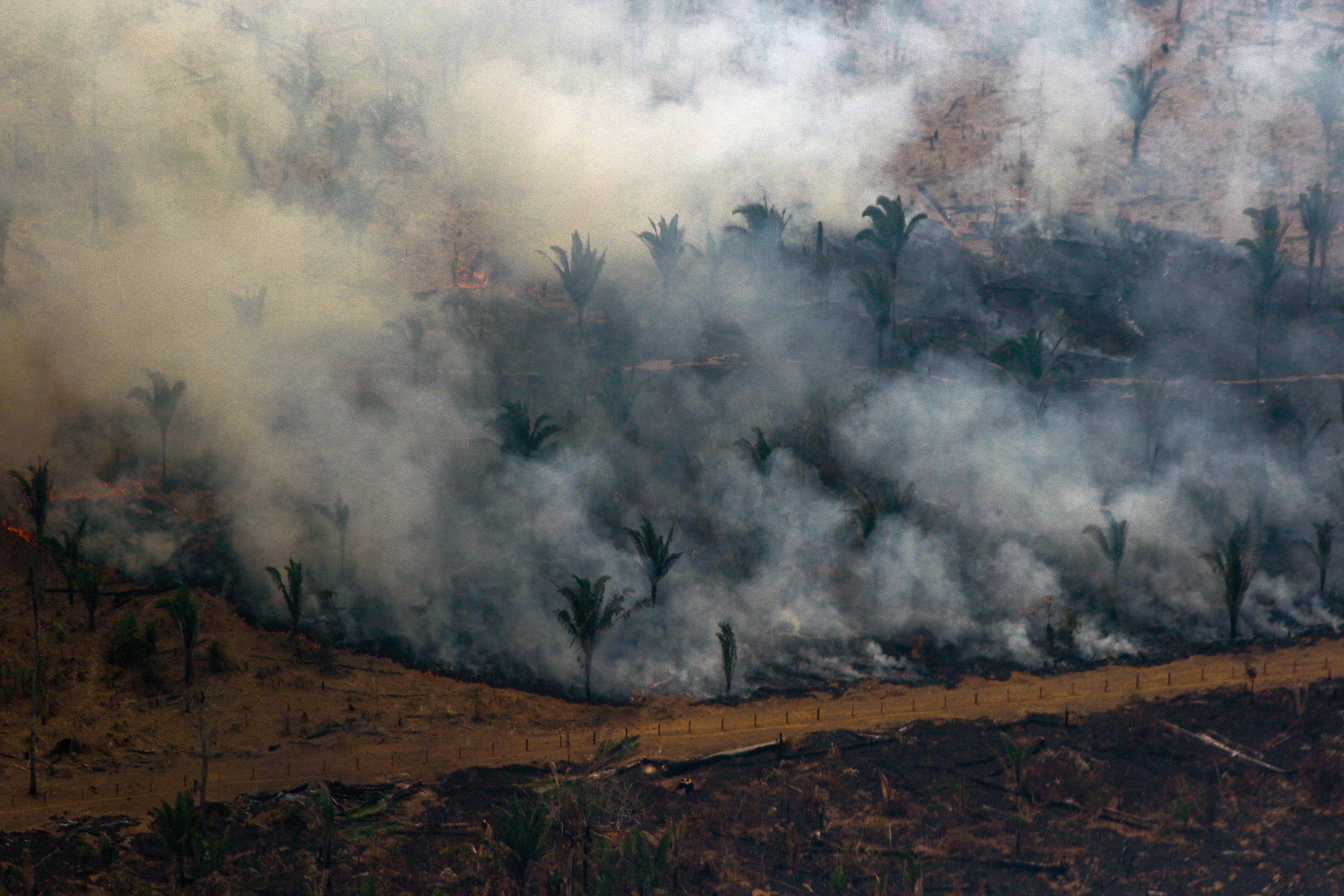 Évtizedes rekordot döntött Brazíliában az amazonasi erdőirtás mértéke