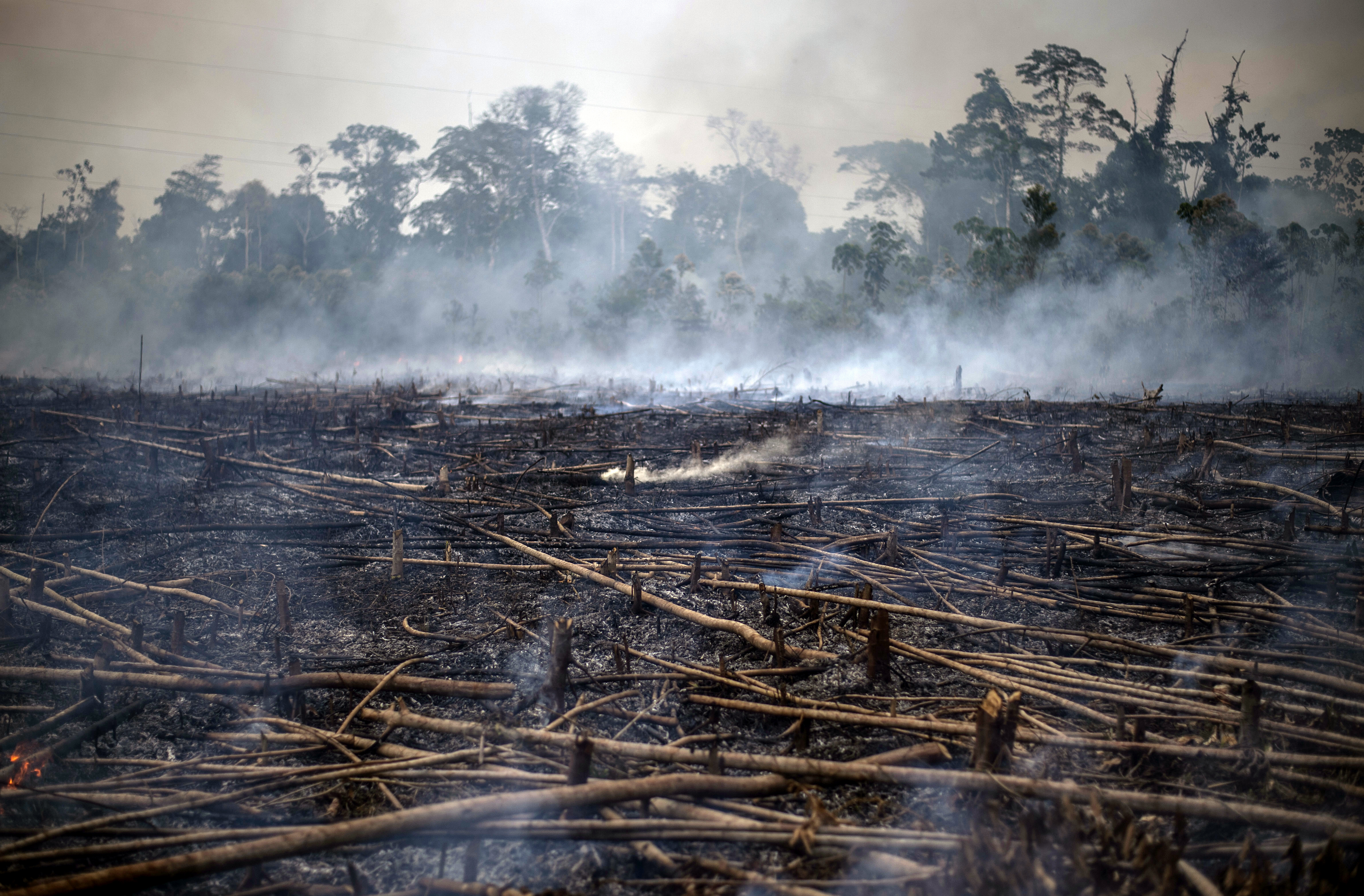Idén már majdnem kétszer annyi esőerdőt pusztítottak ki Brazíliában, mint tavaly