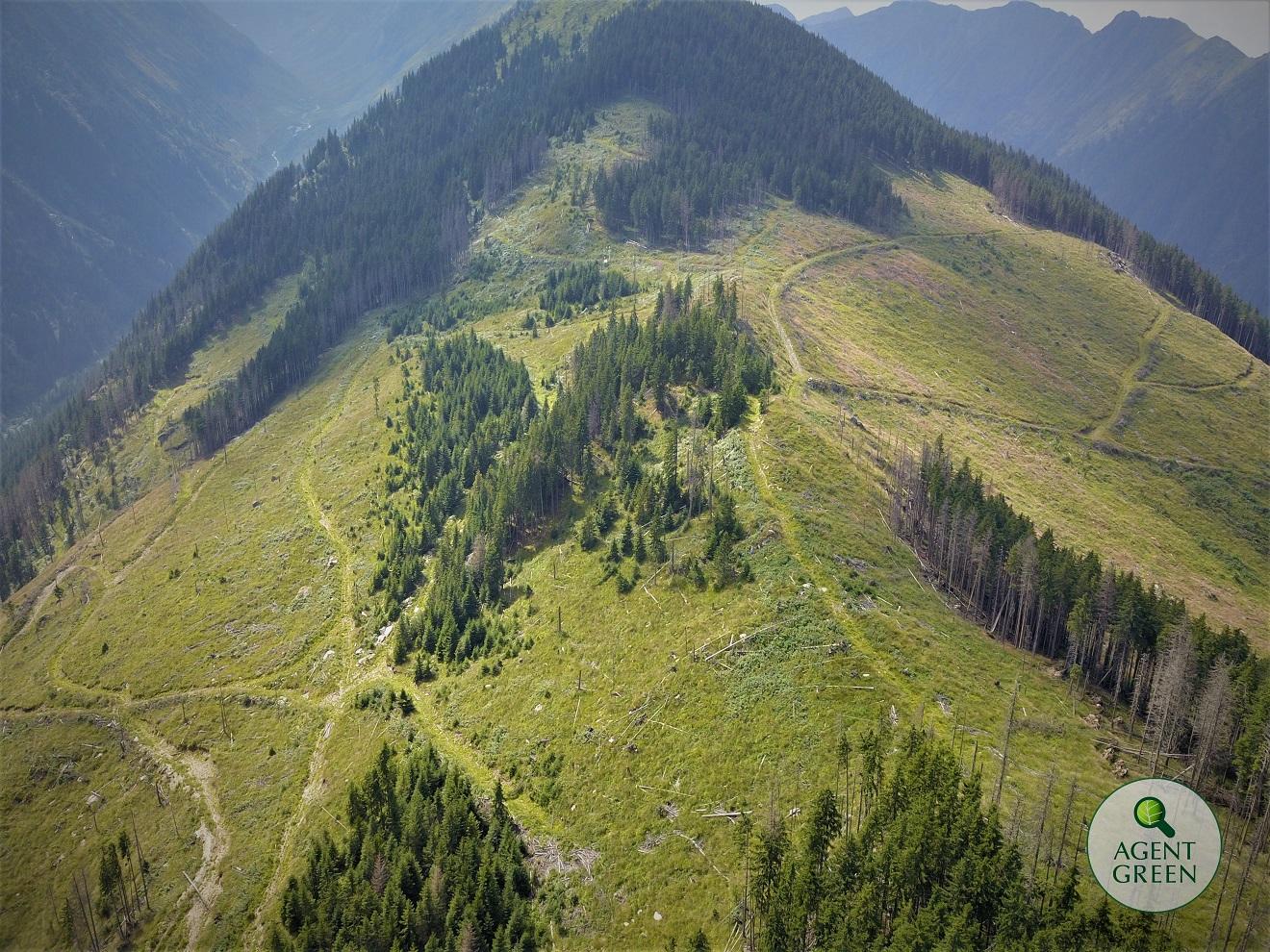 Környezetvédő szervezetek Brüsszeltől remélnek védelmet a román erdőknek