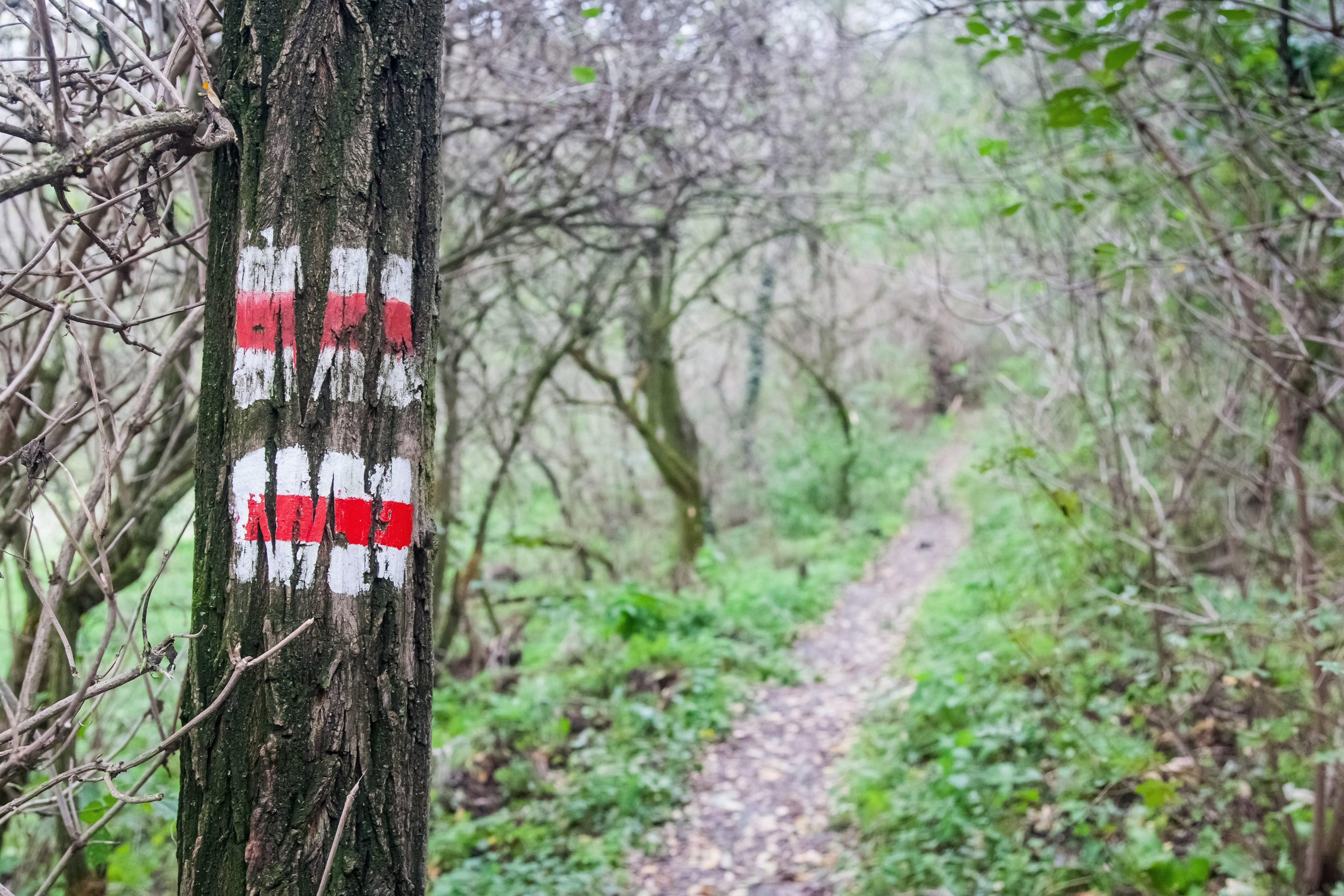 Egy hónapig csak munkaidőben lehet kirándulni a Velencei-hegységben, mert a vadászok lefoglalták az erdőt