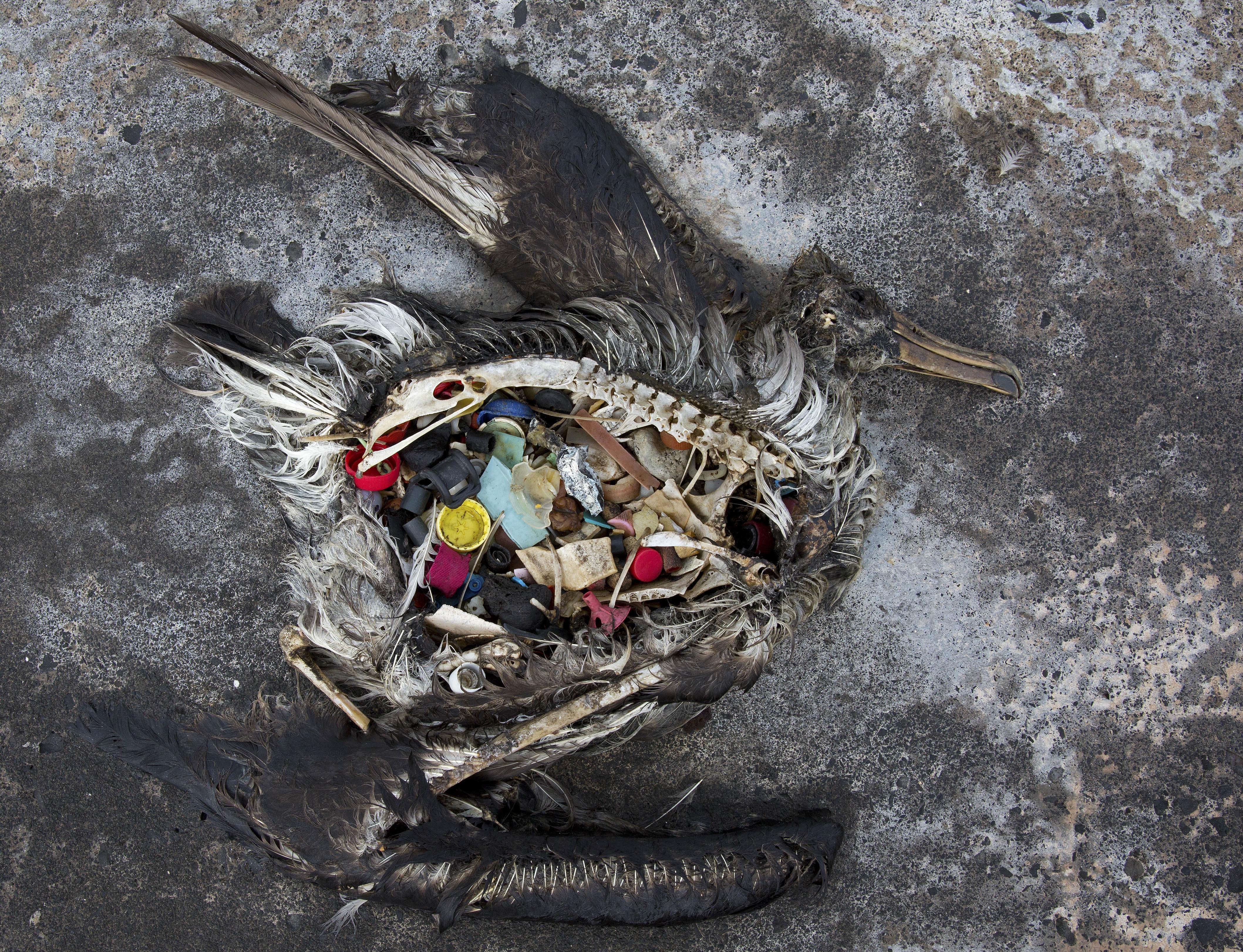 Végre sikerült működésre bírni az óceánba dobott műanyagot begyűjtő szerkezetet