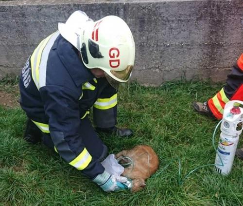Oxigénpalackkal lélegeztettek egy lakástűzből kimentett macskát a tűzoltók Gödöllőn