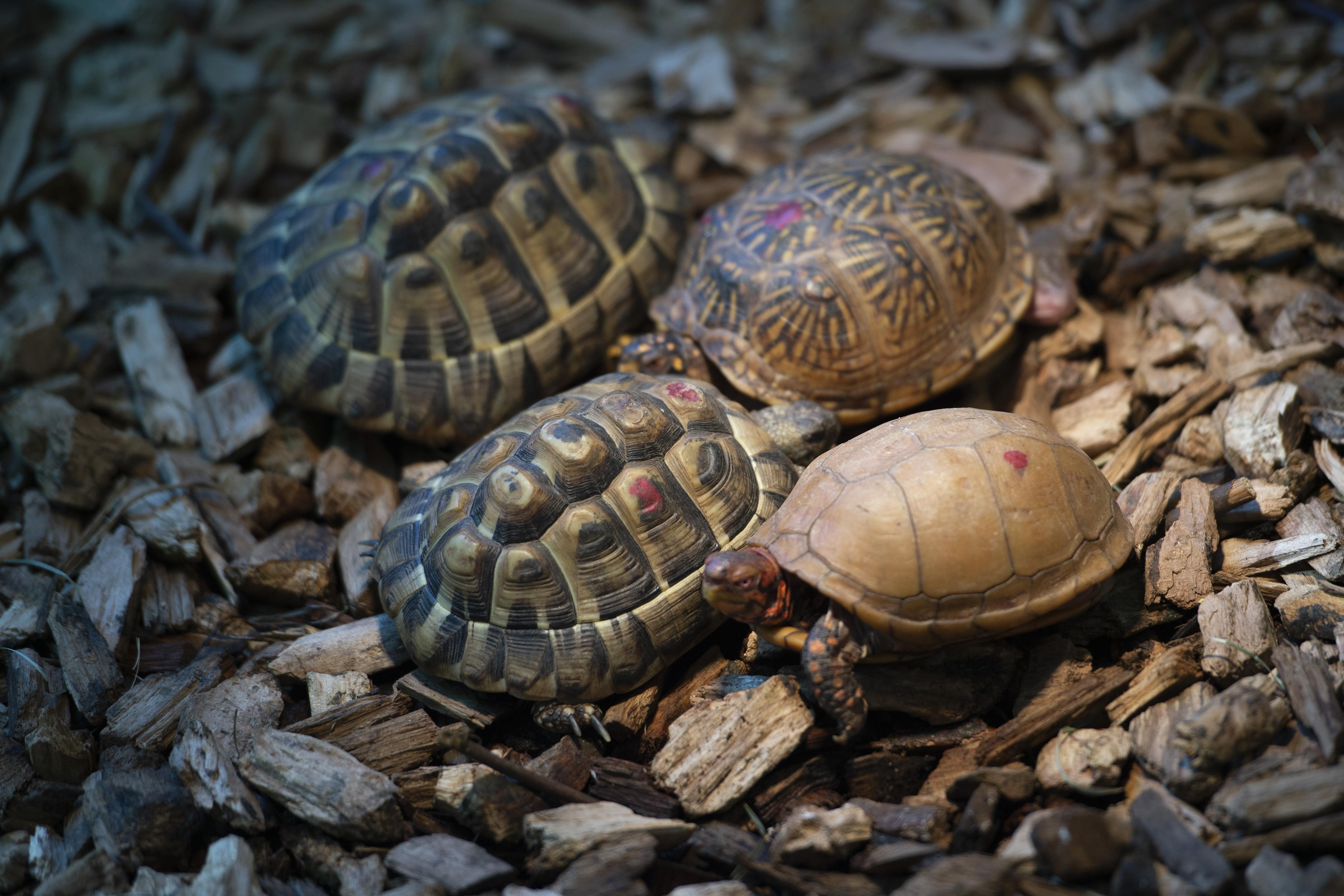 Elköltözött a család, de a házi teknős inkább visszament oda, ahol régen laktak