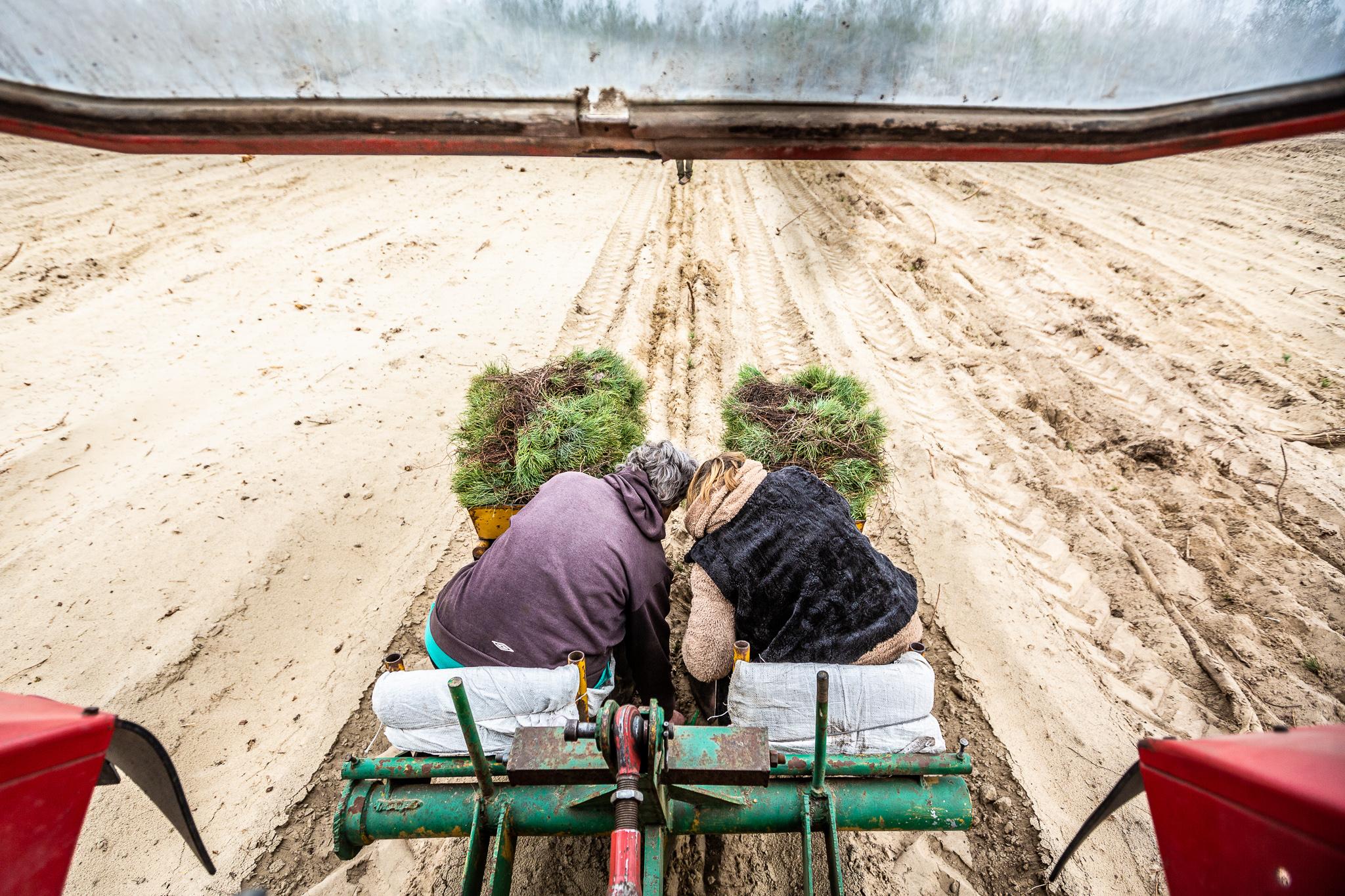 Az elmúlt 10 évben alig nőtt a magyar erdők területe, az Agrárminisztérium most nekiugrana a fásításnak