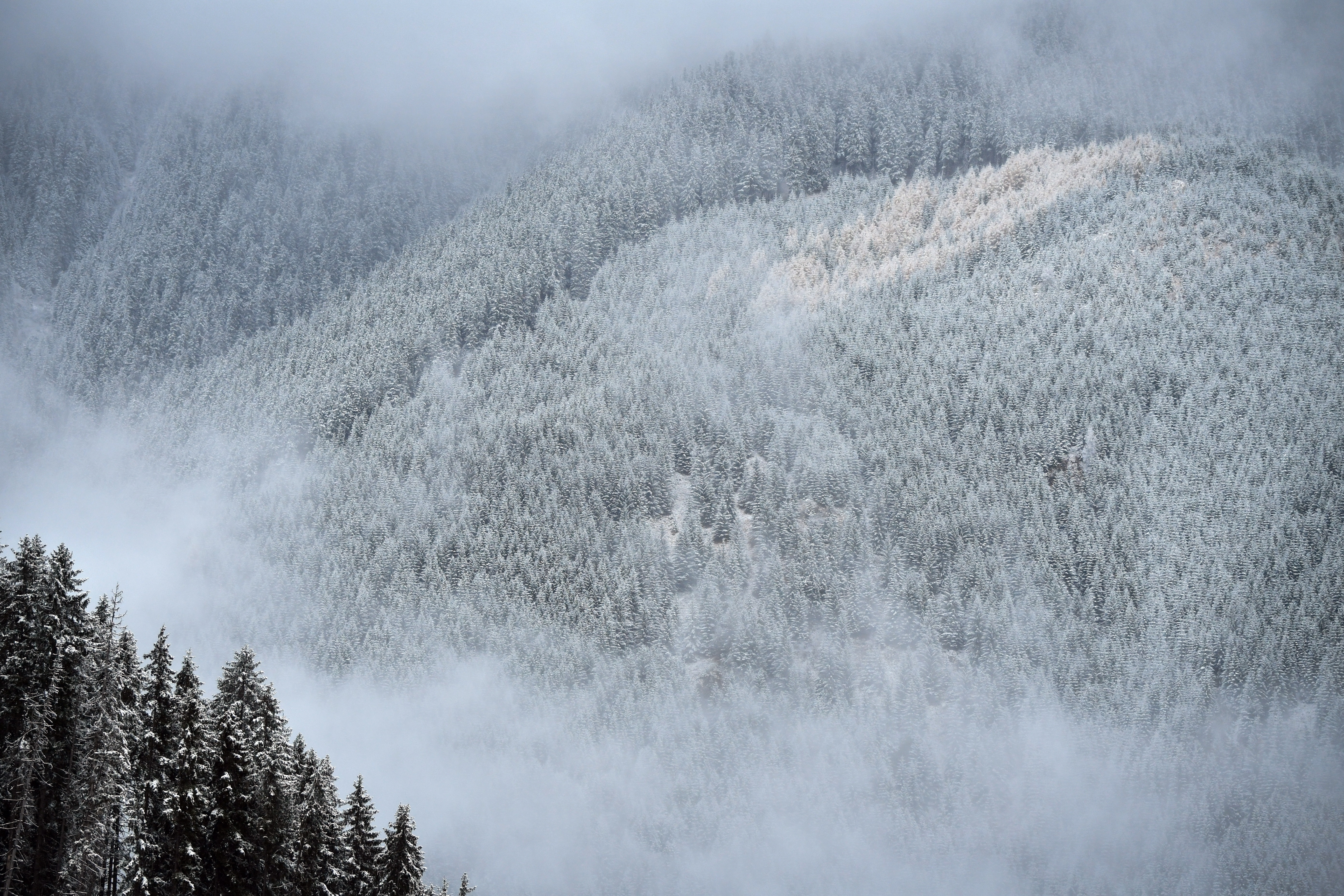 Illegális erdőirtásokról forgatott a Netflix stábja, amikor fatolvajok támadtak rájuk Romániában