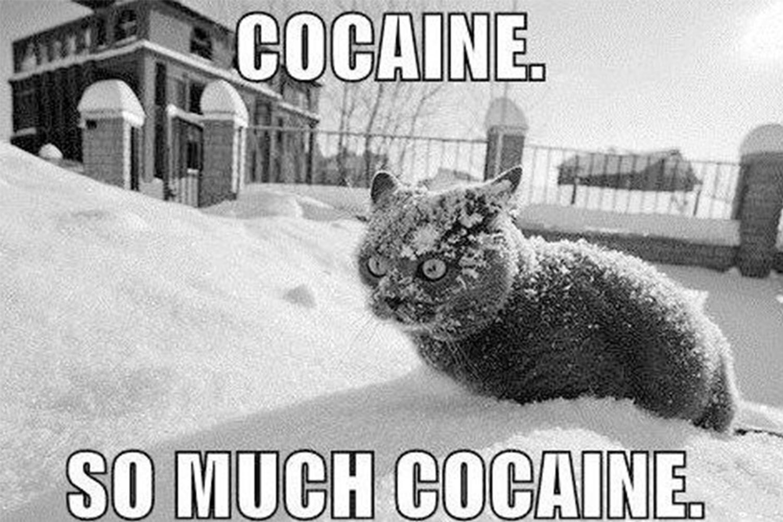 Még mindig várja a kitöltőket a világ legnagyobb drogos felmérése