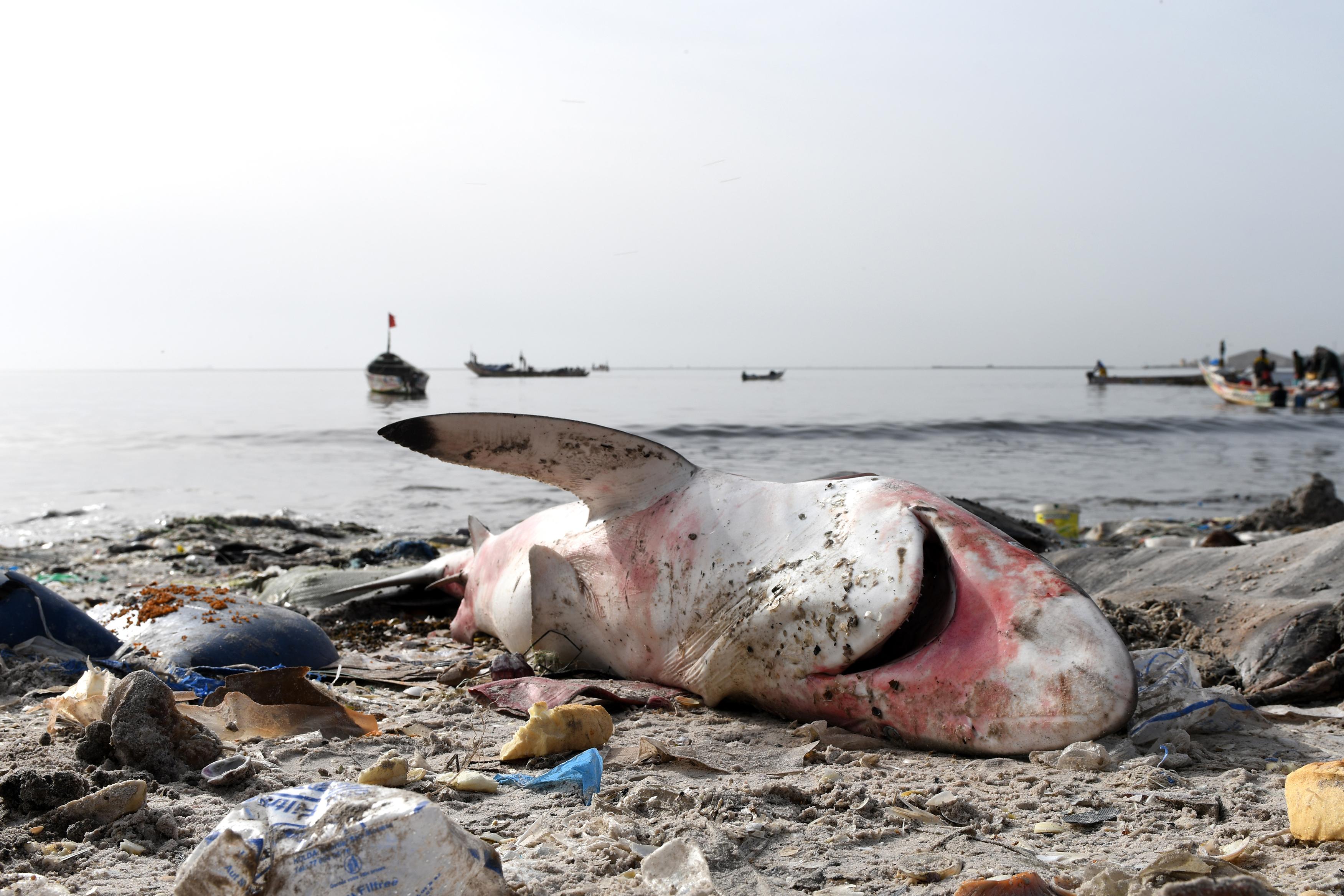 Szökik az oxigén az óceánokból, szaporodnak a halálzónák