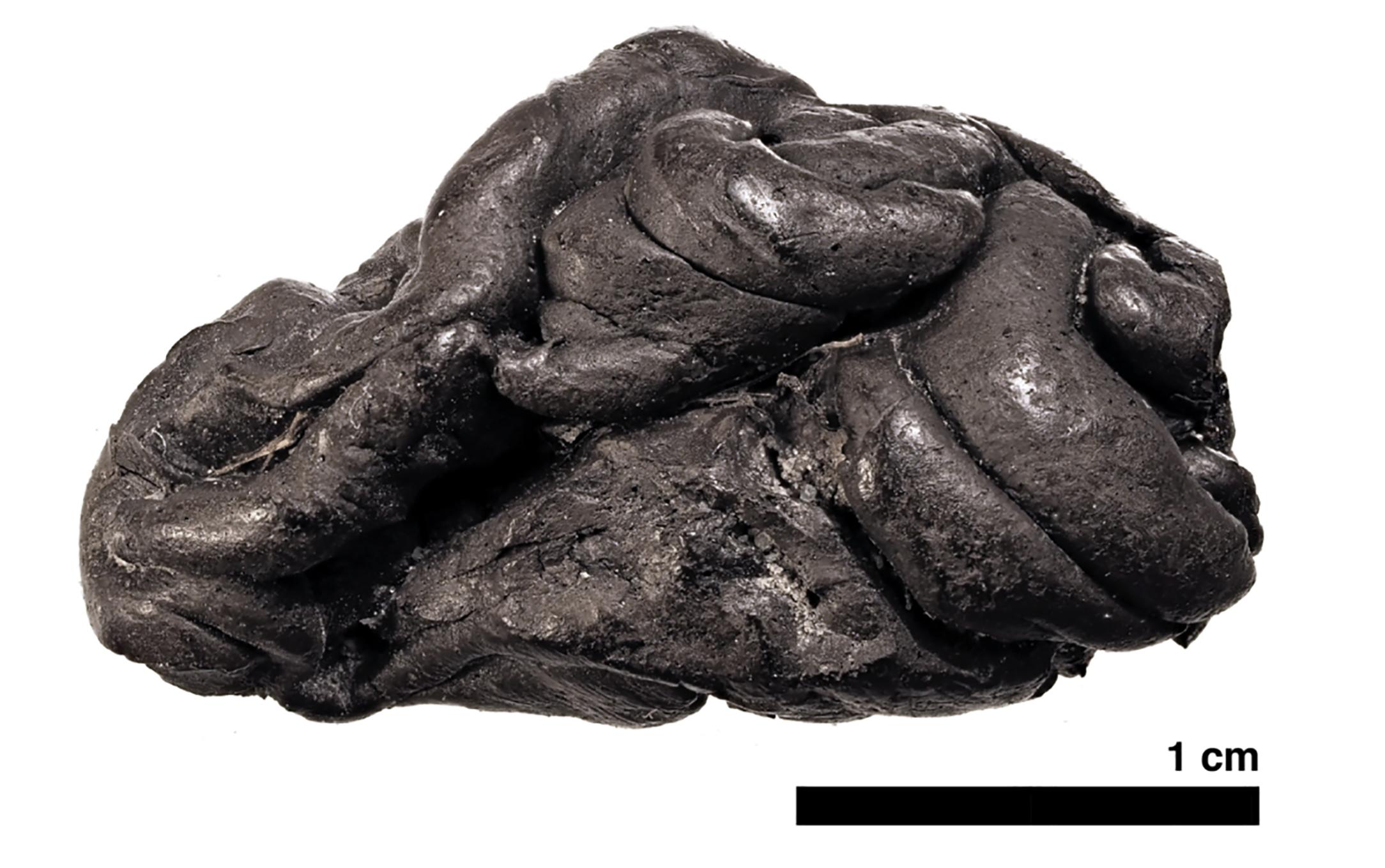 Dán tudósok rengeteg mindent megtudtak arról a nőről, aki 5700 éve elrágott egy rágógumit
