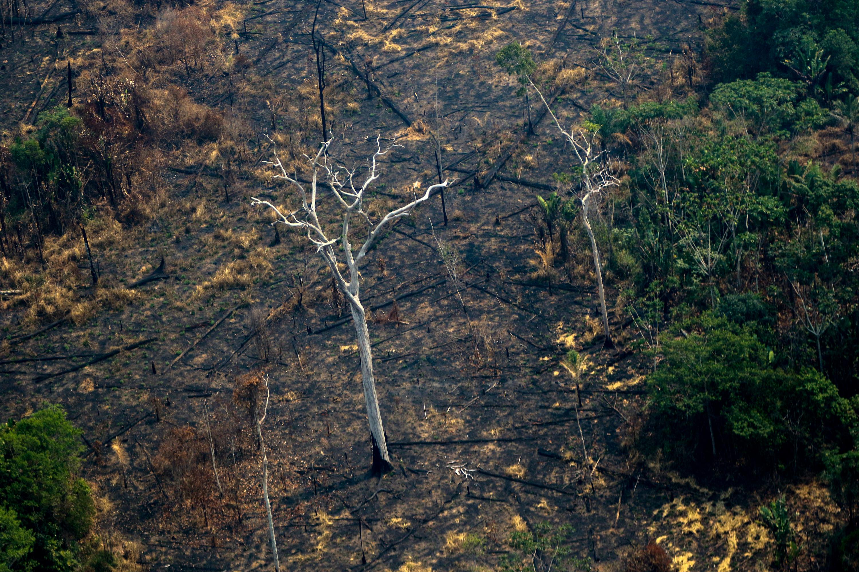 12 éve nem volt ekkora erdőirtás Brazília őserdőiben