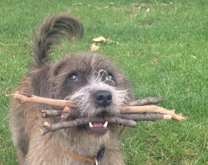 Kölcsönözhető botokkal oldotta meg minden kutyatartó állandó bosszúságát egy új-zélandi férfi