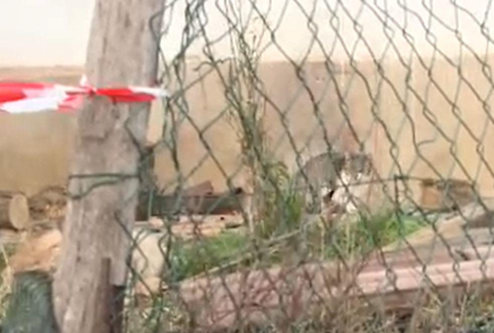 A macskája kaparta az ajtót, ezért a férfi felébredt és túlélte a lakástüzet