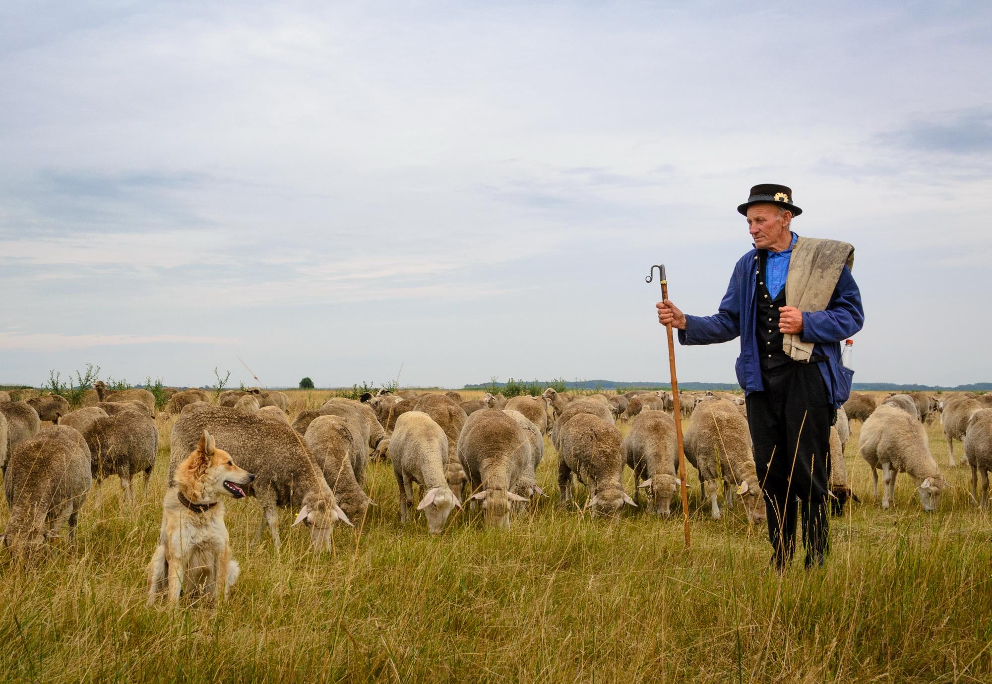 Ha beüt a válság, újra szükségünk lehet majd a pásztorok tudására