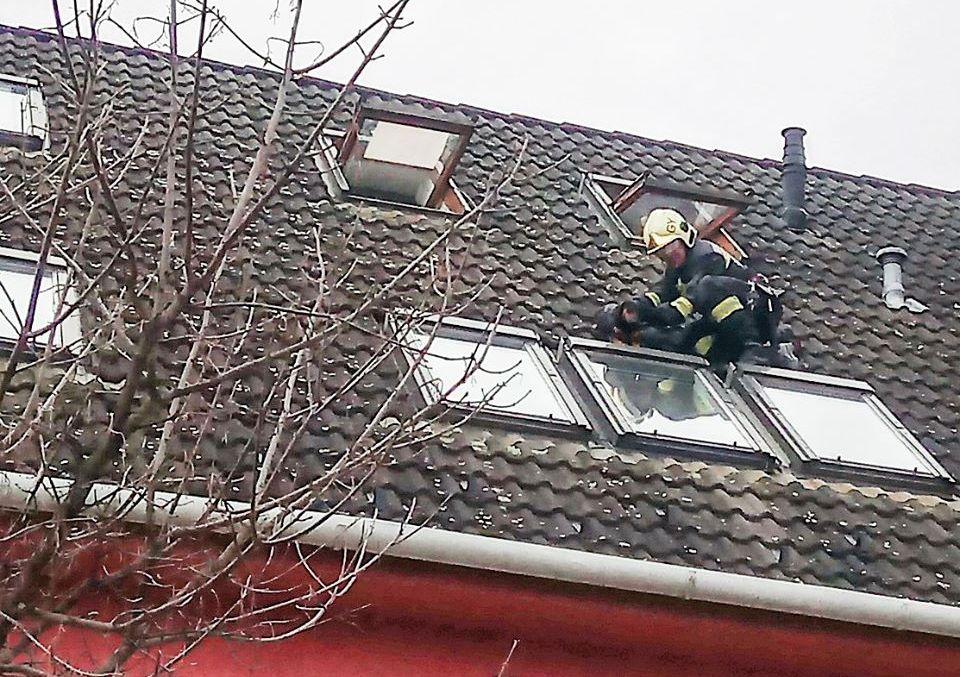 Tűzoltók mentették meg a sátortetőn ragadt tacskót