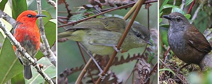 10 új madárfajtát fedeztek fel Indonéziában