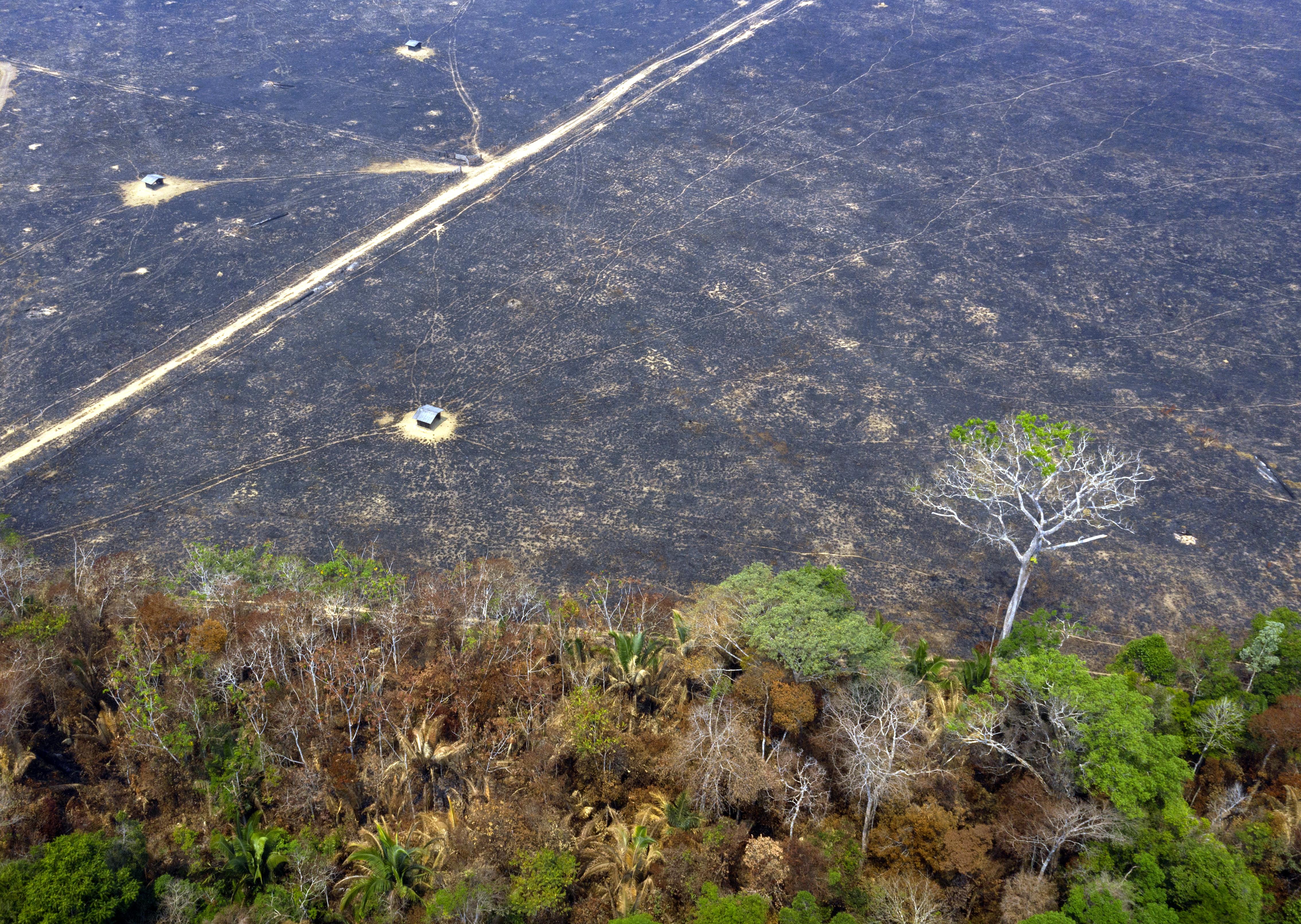Újra rekordon a brazíliai erdőirtás