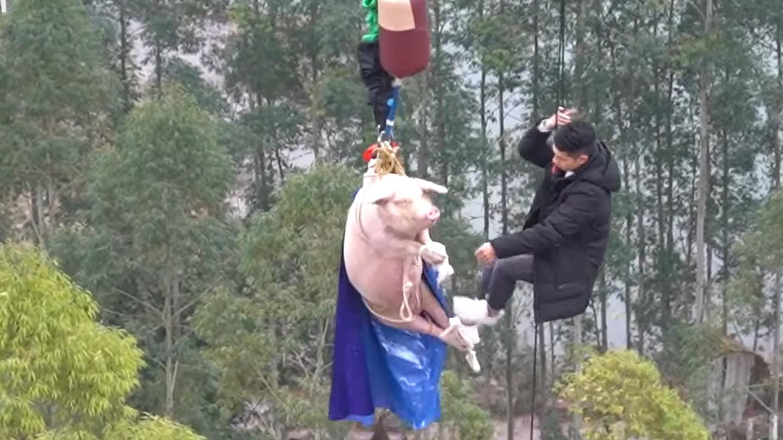 Egy 68 méteres toronyból lökték ki a bungee jumpingozó malacot