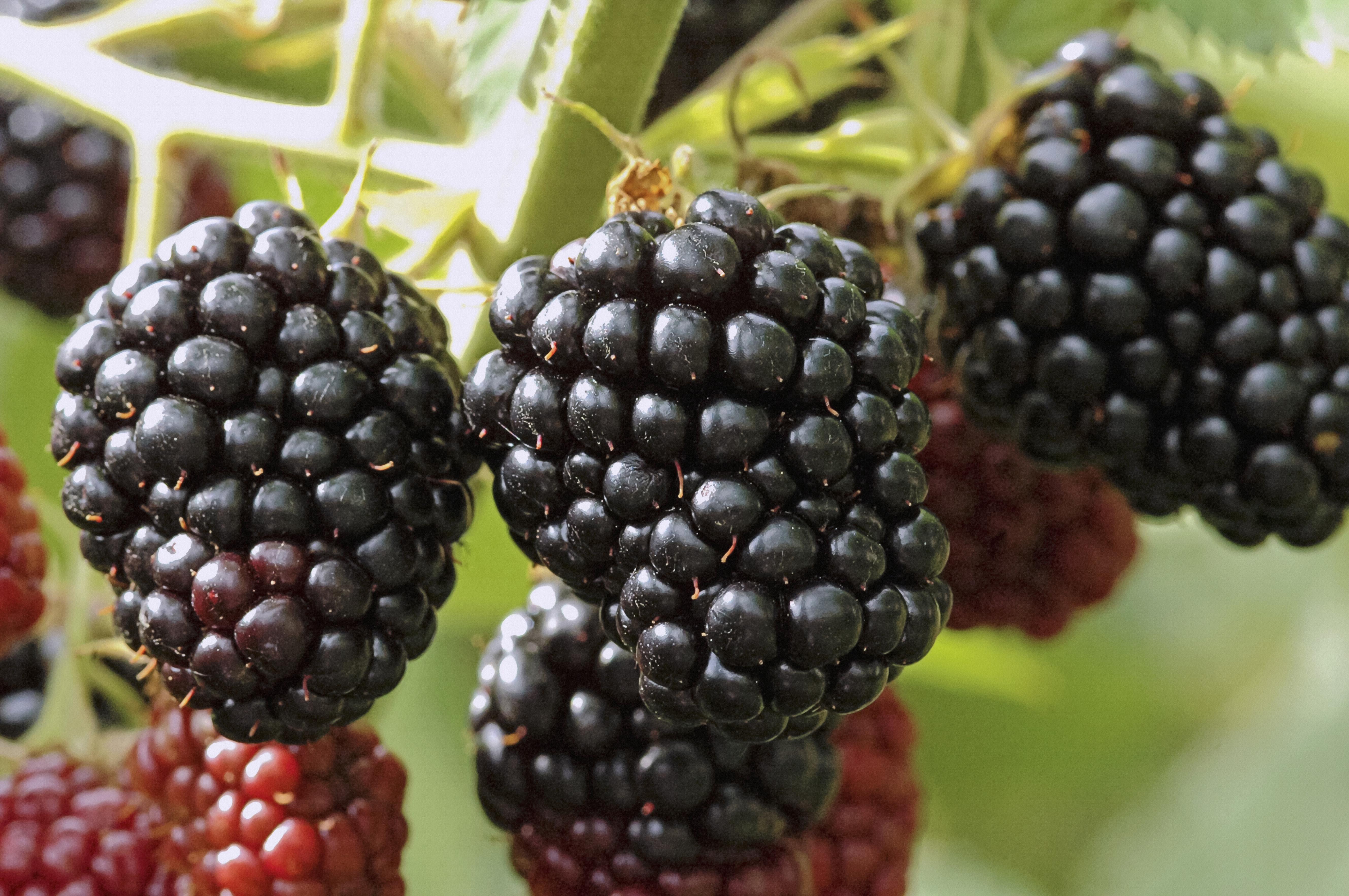 Szeptembertől nem gyártanak több Blackberryt