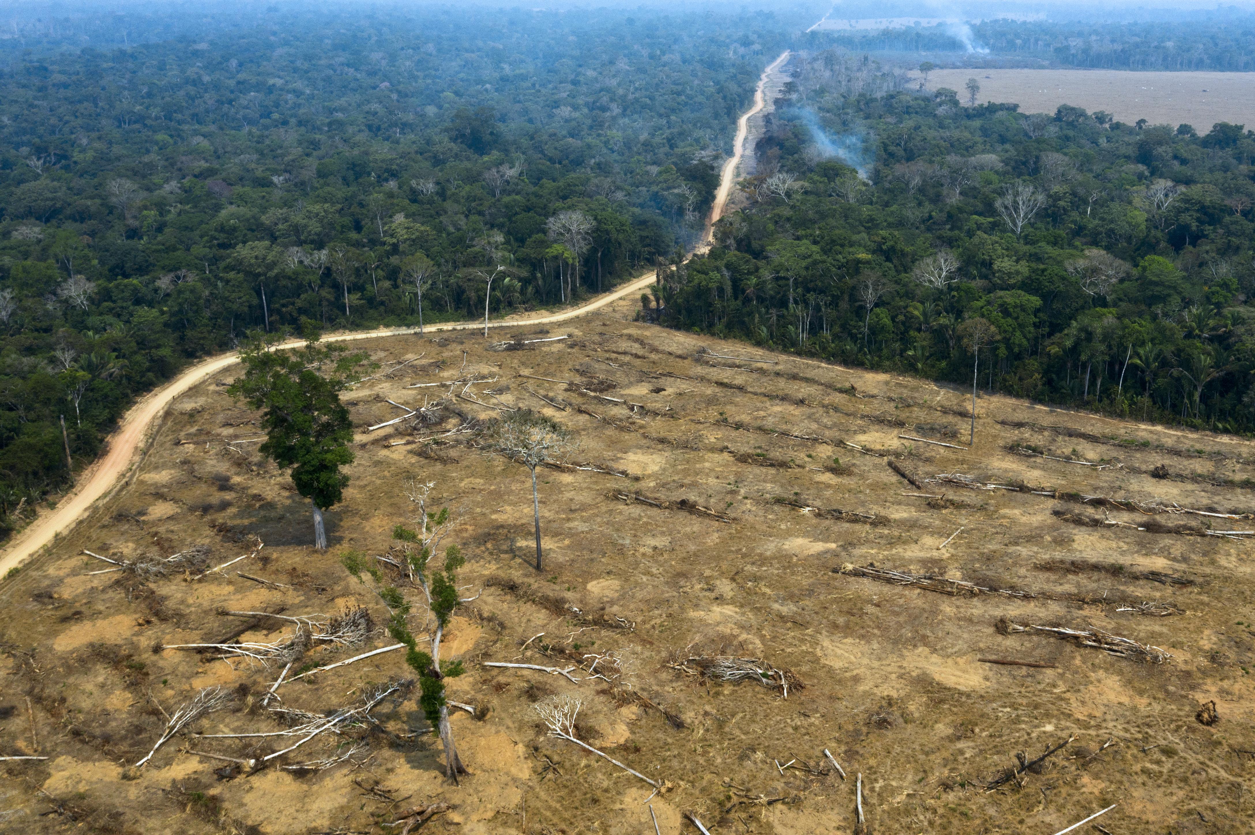 ENSZ, WHO, WWF: A világjárványok a természet szétverésének a következményei