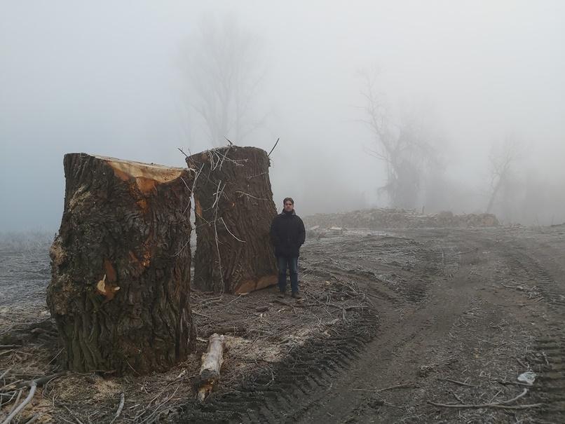 Évszázados fákat irtott ki a vízügy a Tisza mentén, a WWF szerint engedélyük sem volt rá