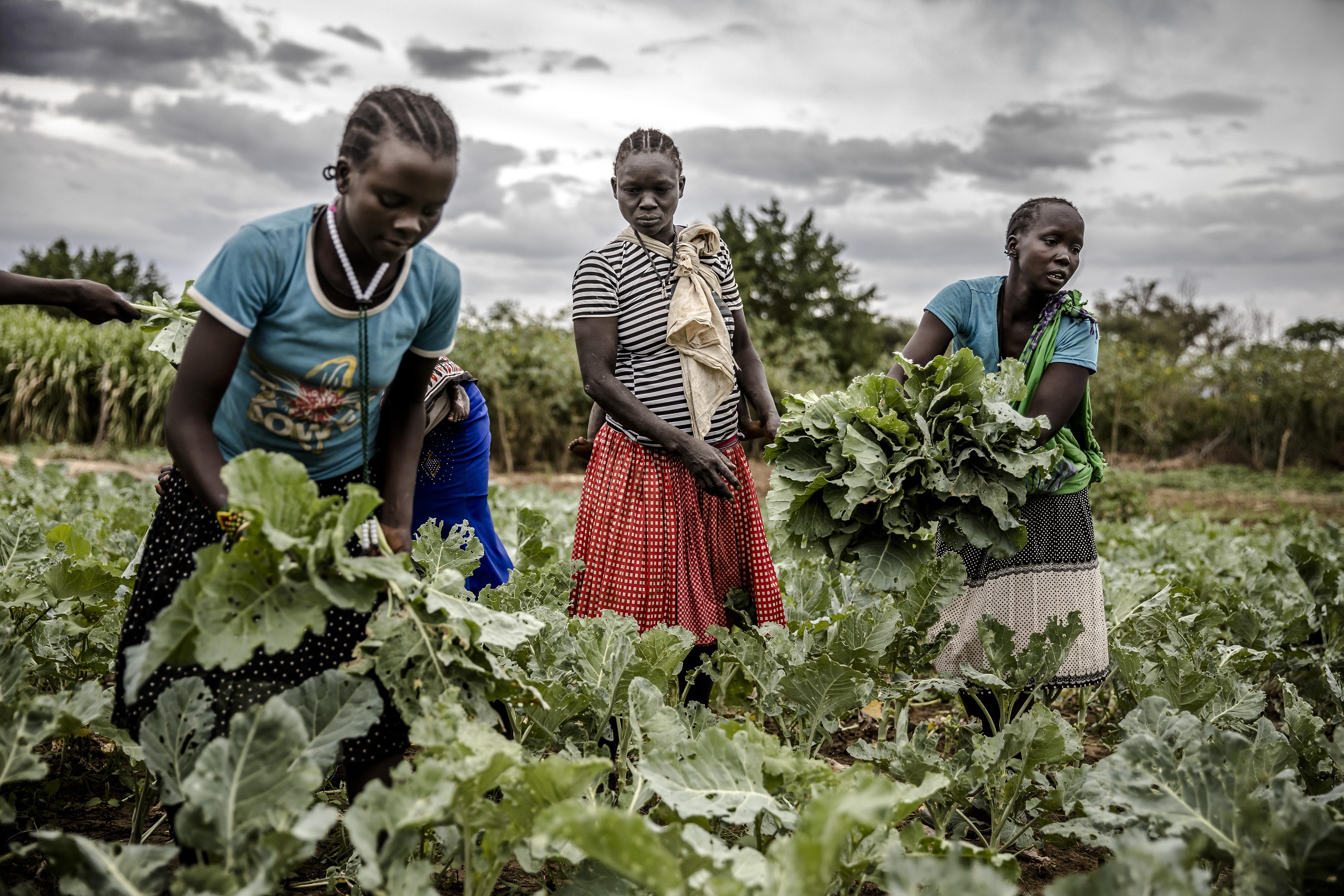Ahogy pusztul tovább a természet, úgy nőhet a nők elleni erőszak mértéke is a világban