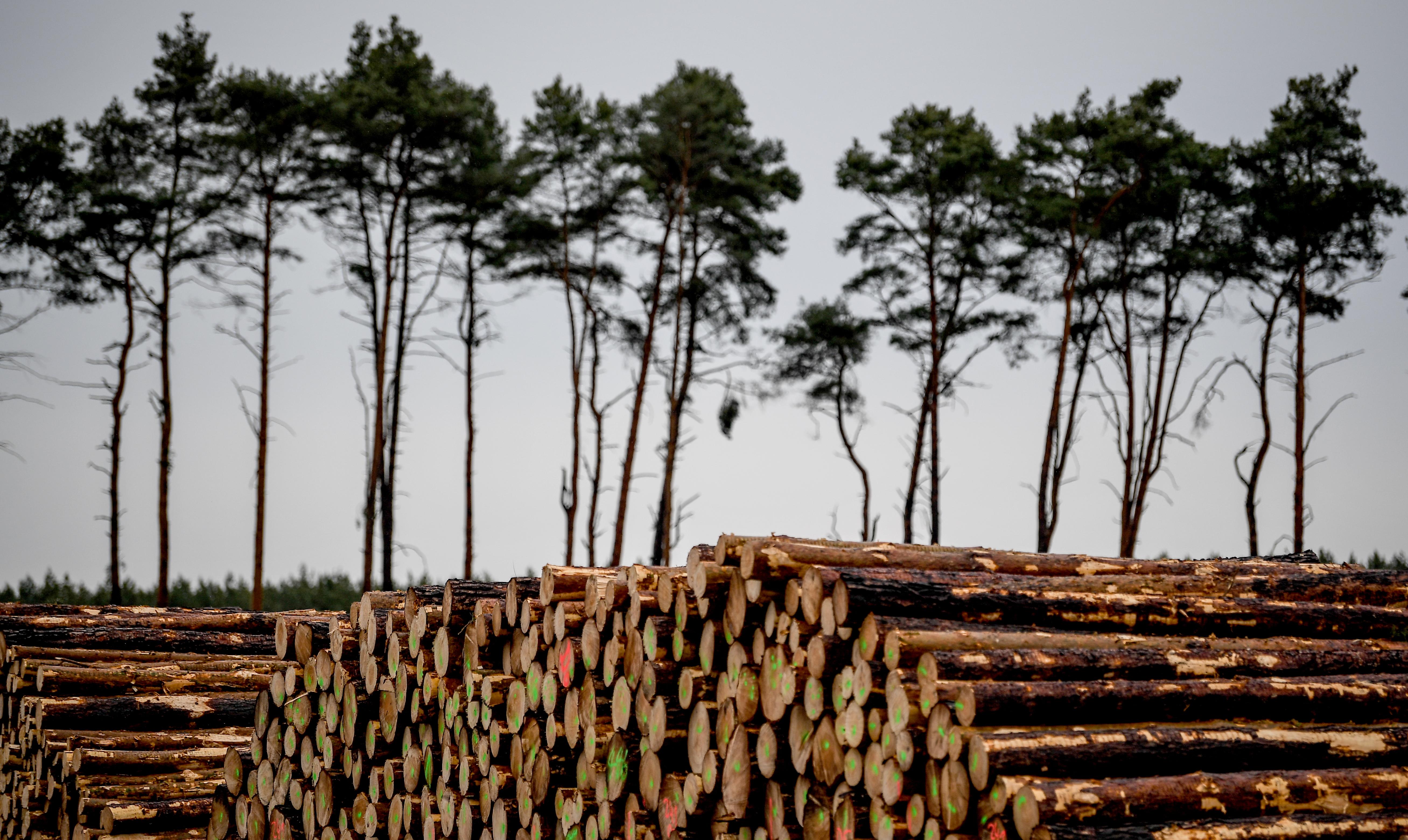Az épülő Tesla-gyár miatt 92 hektárnyi erdőt vágnának ki Berlin mellett, de egy német bíróság most közbelépett