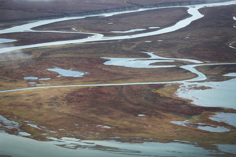 Sokkal egyszerűbb lesz a jövőben medvebocsokat és farkaskölyköket gyilkolni Alaszkában