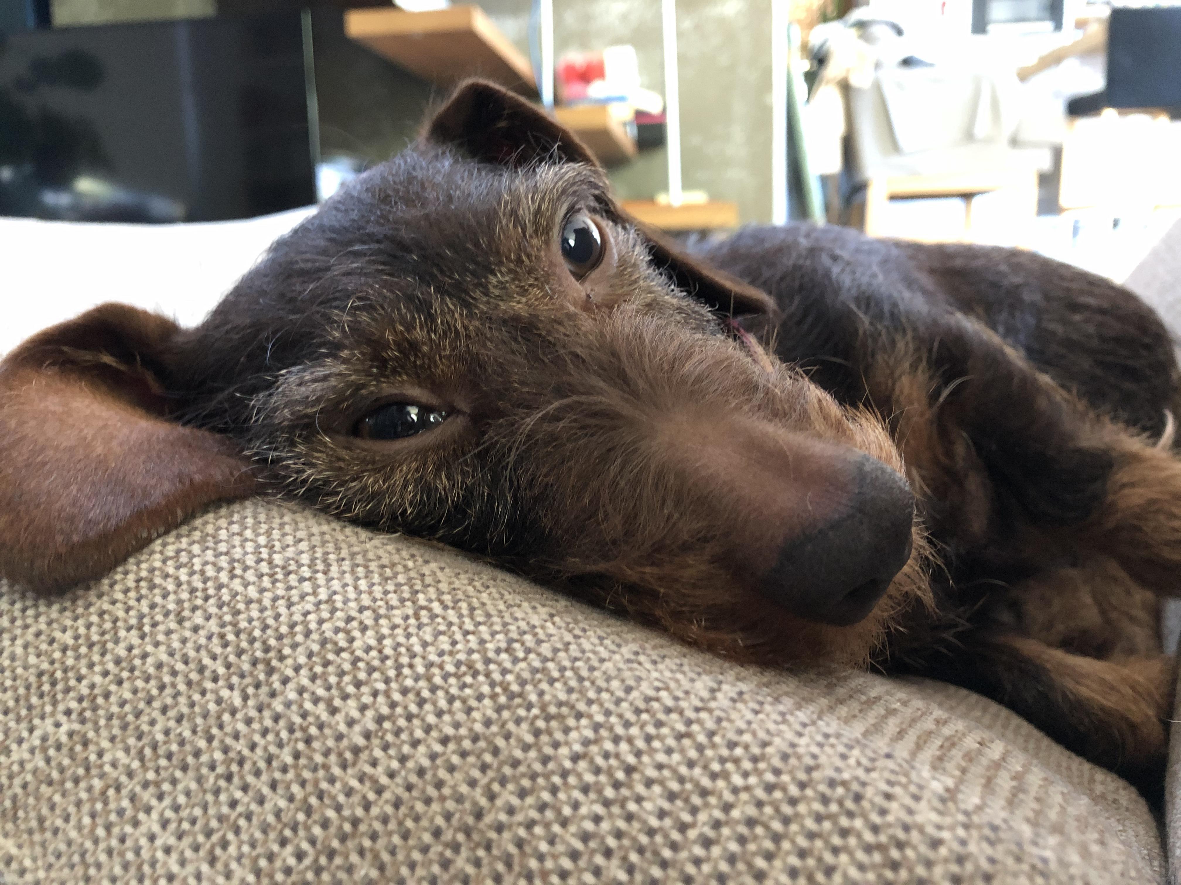 Hőradar is van a kutyák orrában