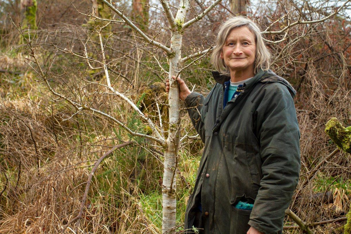 Évtizedeken át vágta ki egy nő Írországban a telepített fákat, hogy őshonos fajokat ültessen a helyükre