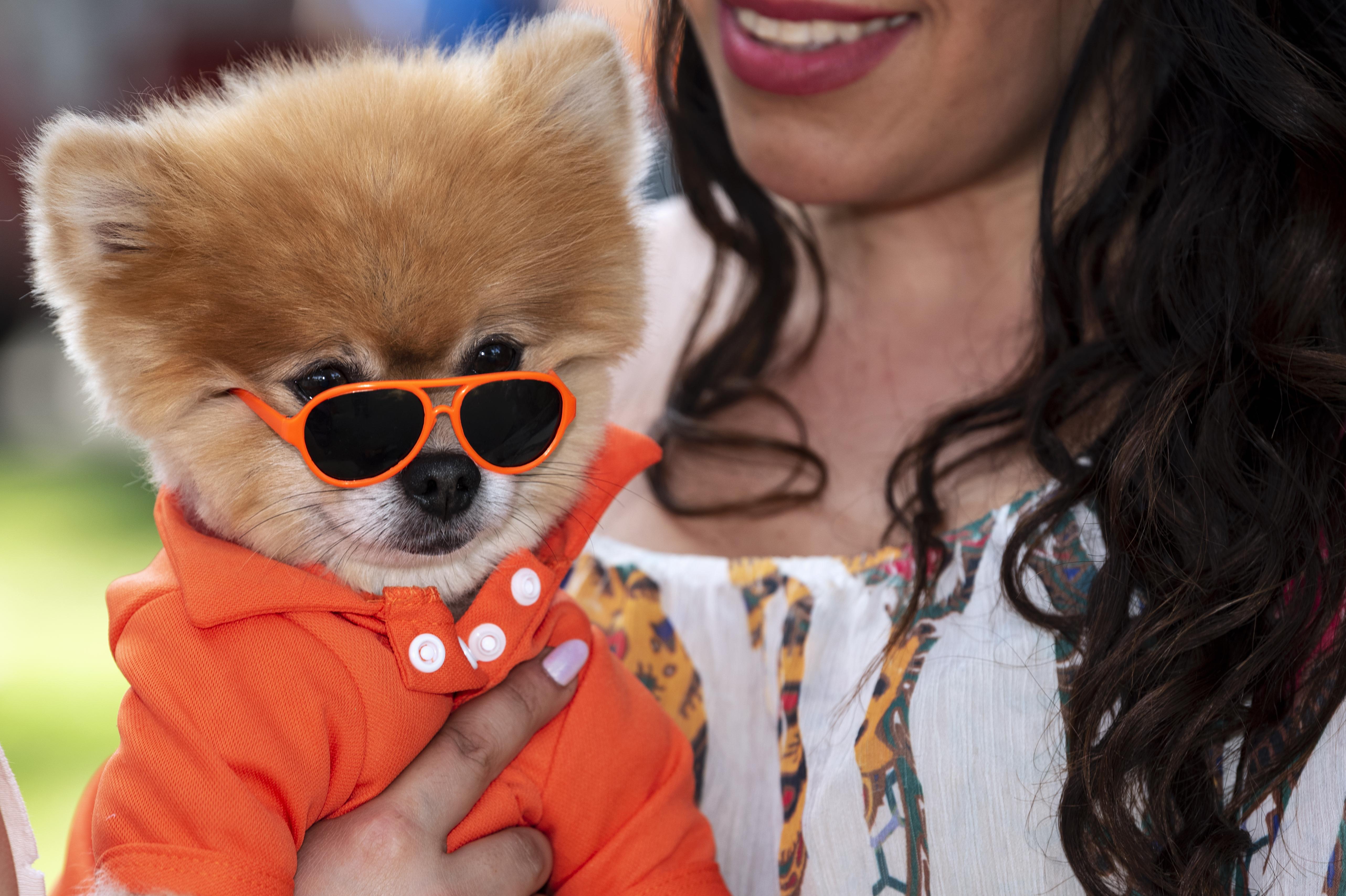 Hongkongban arra figyelmeztetik az embereket, ne csókolgassák a kutyáikat