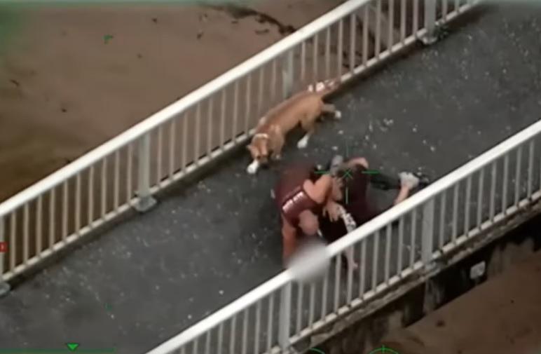 Egy ausztrál kutyás úr lekapcsolta és a földön tartotta a menekülő dílert a rendőrök érkezéséig