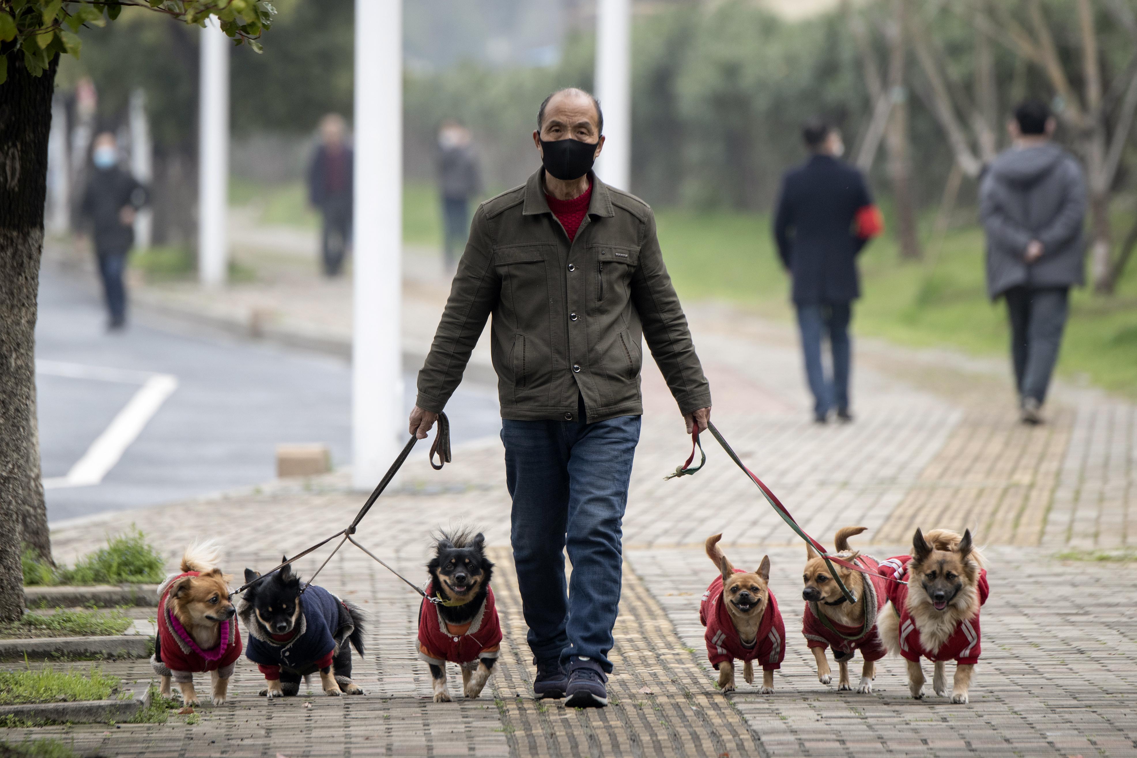Beszarás: mi lesz, ha este nyolctól nem lehet kutyát sétáltatni a kijárási tilalom miatt