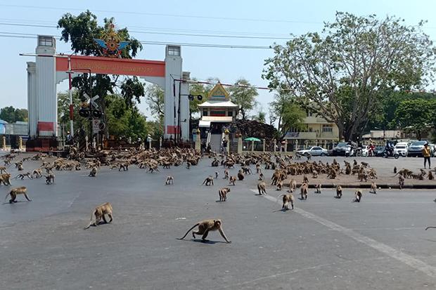 Két majomgaleri több száz tagja tömegverekedett egy város közepén Thaiföldön