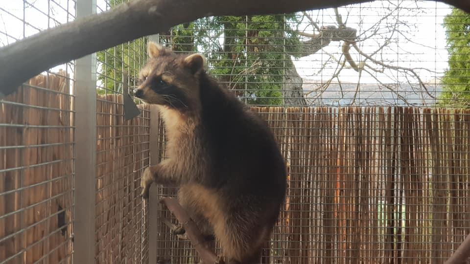 Mosómedvét találtak egy egri lakótelepen