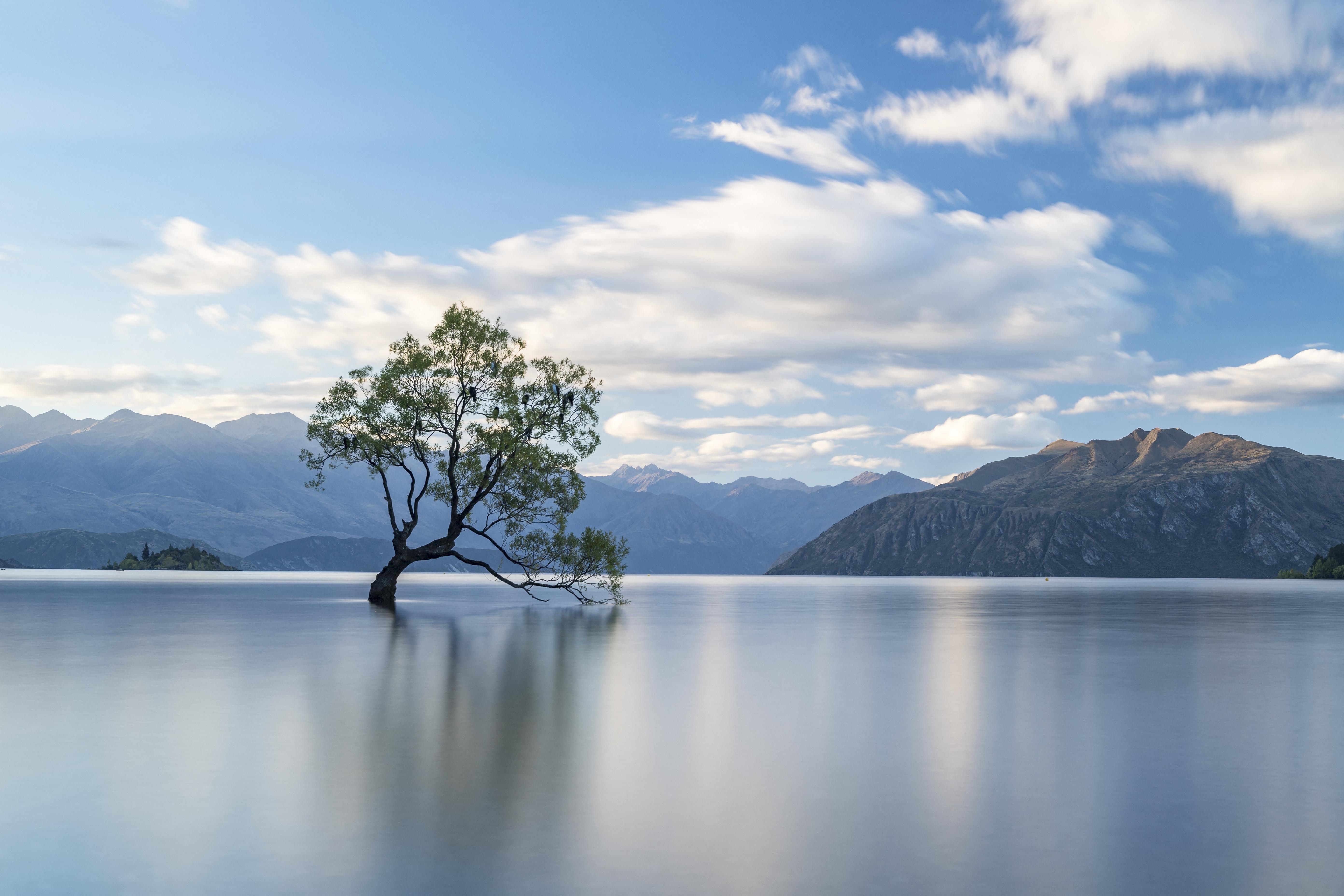 Új-Zéland legtöbbet fotózott fájának fűrésszel estek neki vandálok