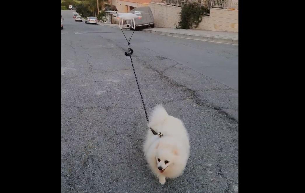 Innovatív kutyasétáltatási módszerek karantén idején