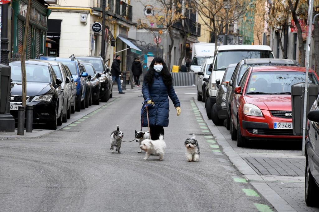 Leállította az örökbefogadást egy debreceni állatmenhely, annyian jelentkeztek kutyáért csak a kijárási tilalom alóli mentesség miatt