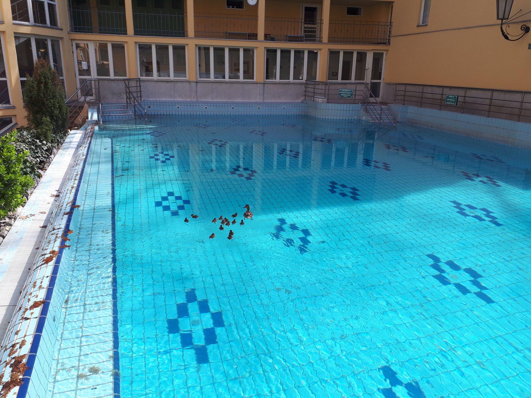 Kacsák vették birtokba a Lukács fürdő üres medencéit